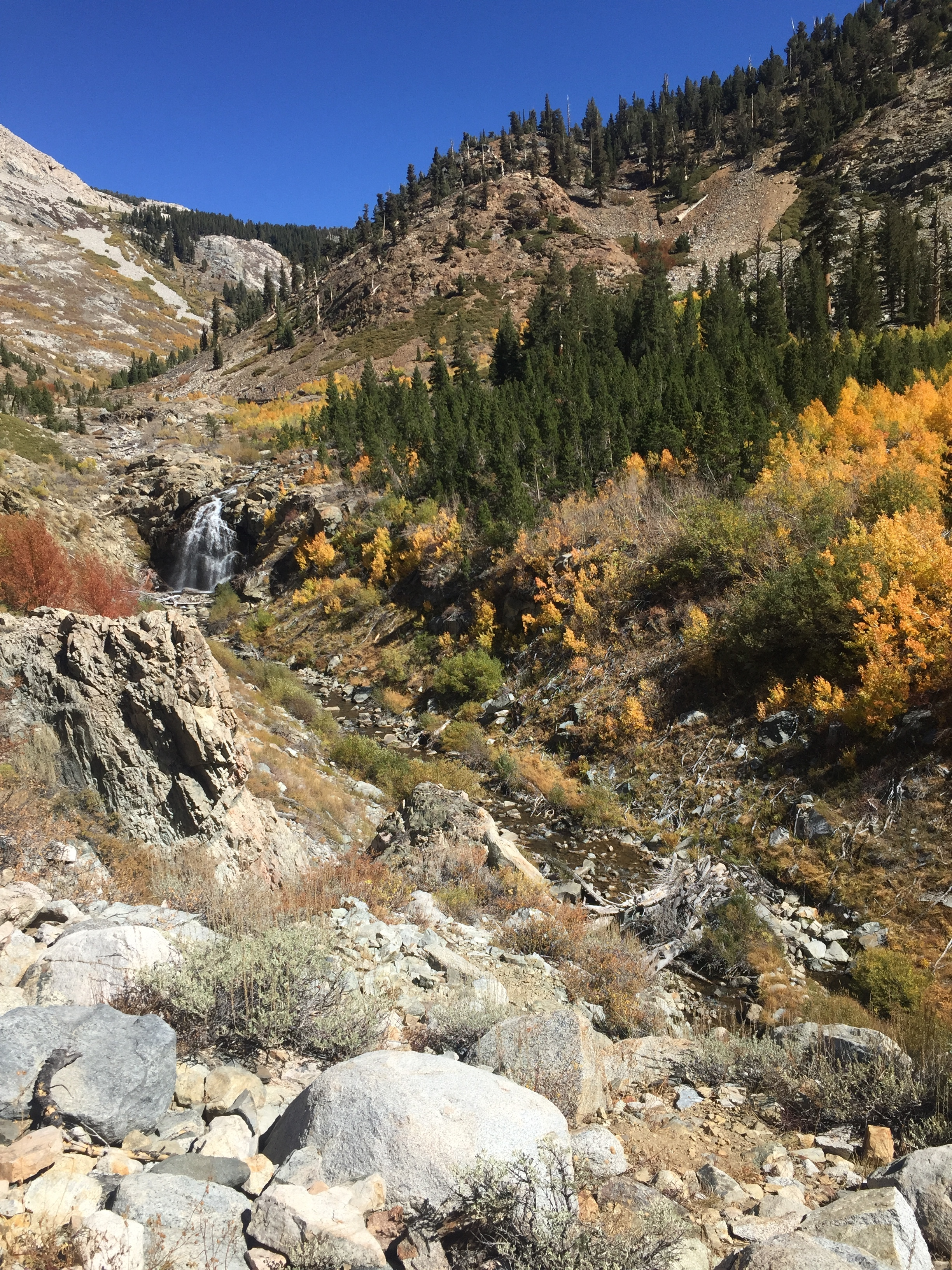 The water level in Woods Creek is a bit low, but it is running well enough to cascade along this hillside of brilliant fall aspens