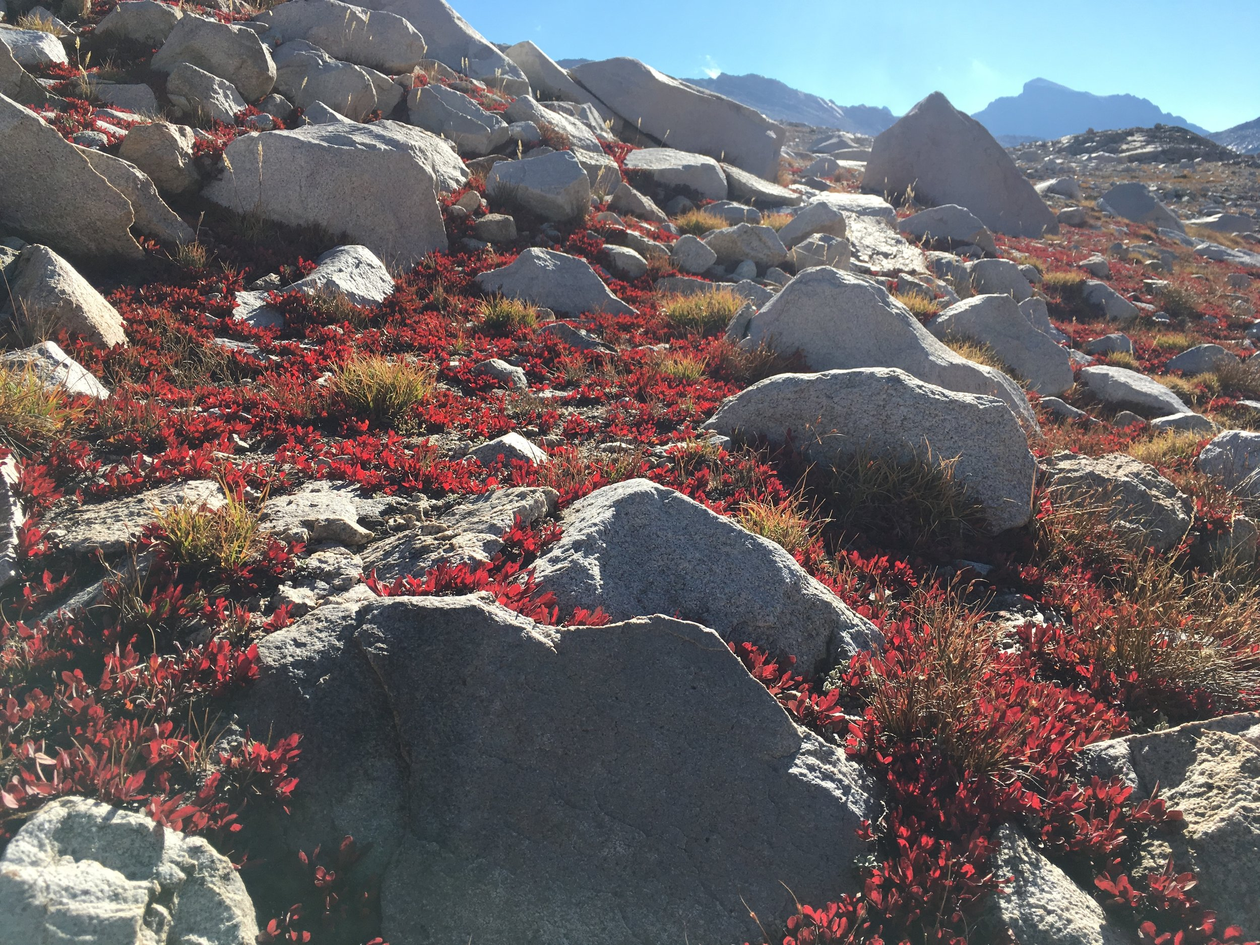 Granite boulders and backlit autumn colors between Sapphire and Wanda Lakes.