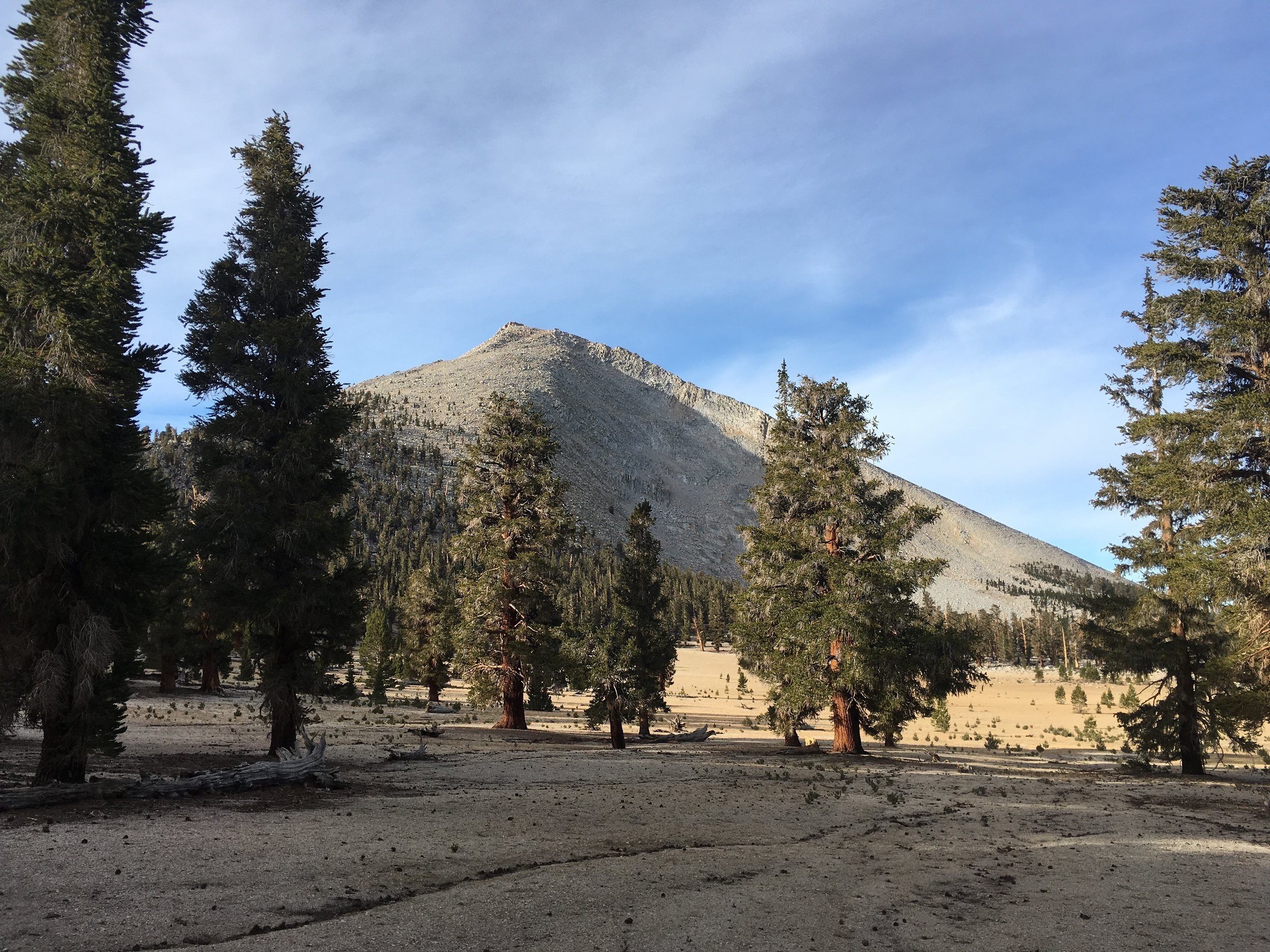 Last hurrah of the Sierra, Mount Guyot, granite basin and Foxtail pines.