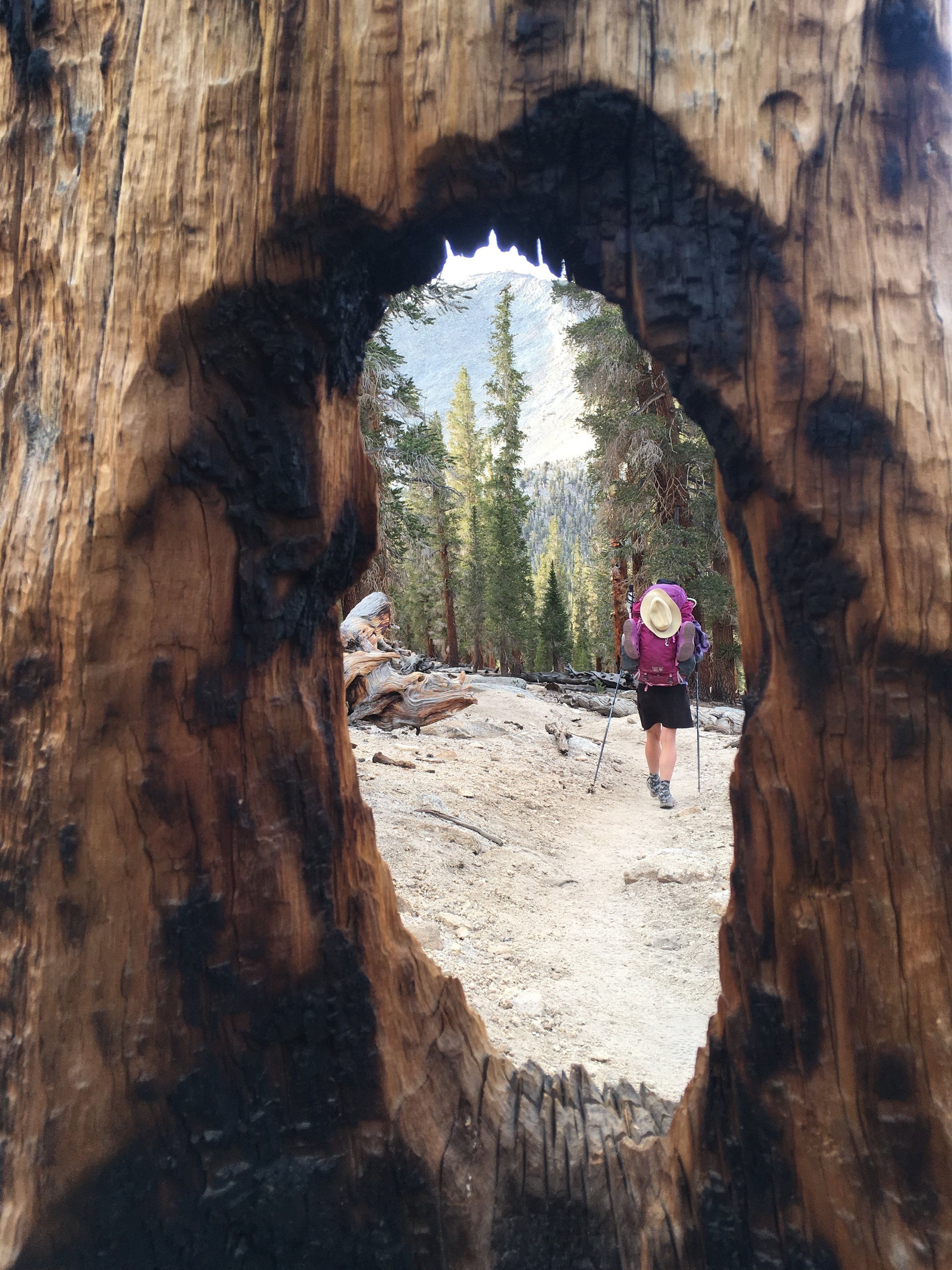 A burnt Foxtail framed Huckleberry as she heads out of the Sierra.