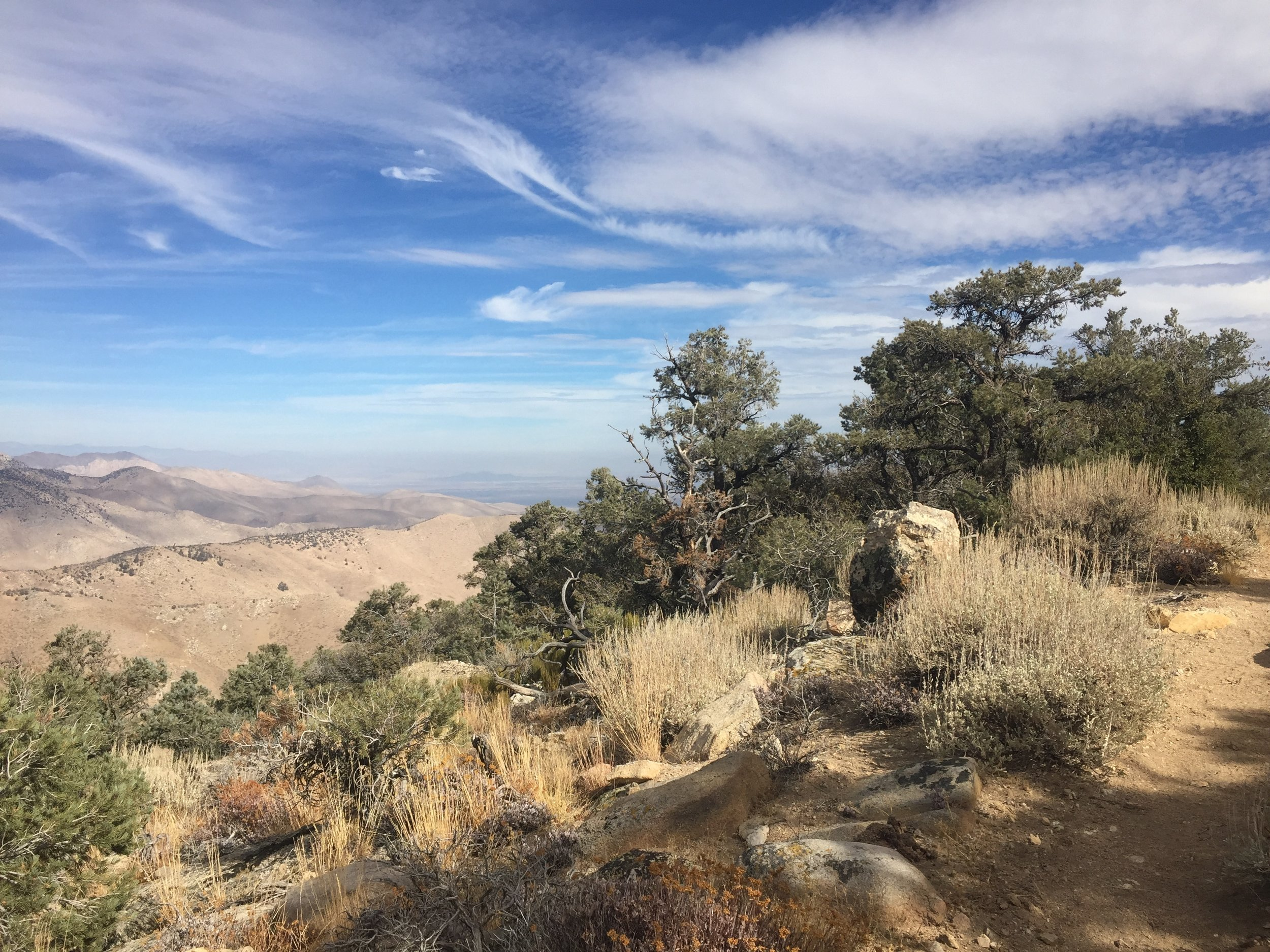 Pinyon pines and broad canyon views