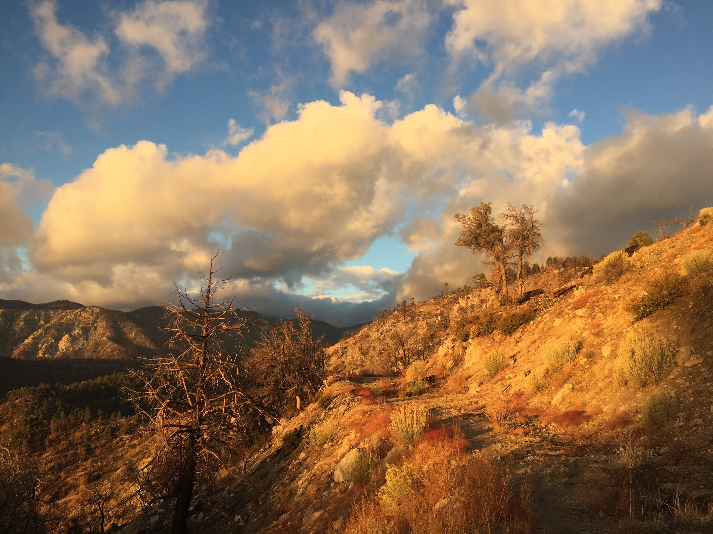 Morning golden hour in the higher elevations as we climb towards San Gorgonio