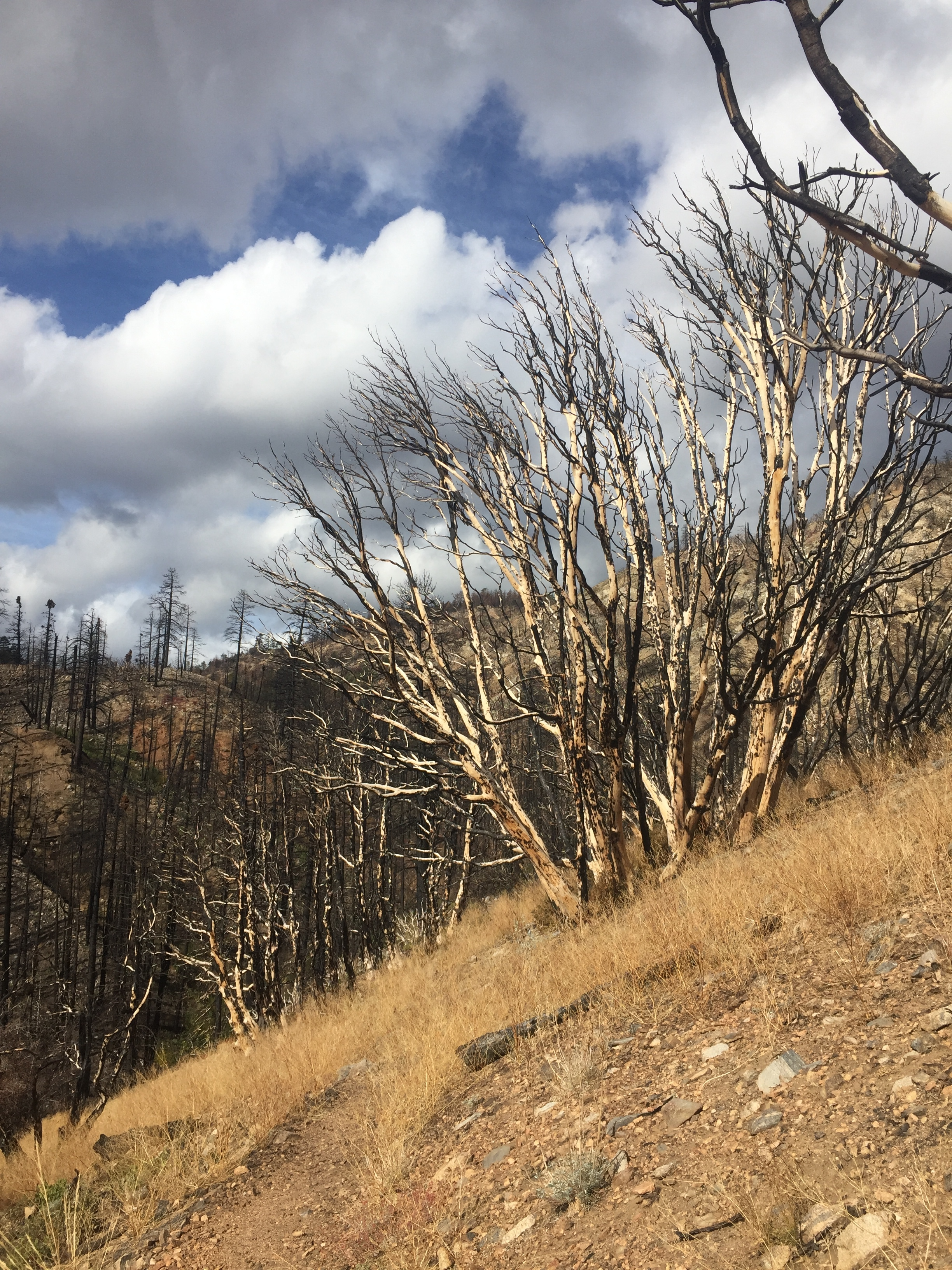 More severe destruction from the Lake Fire in the upper Mission Creek drainage