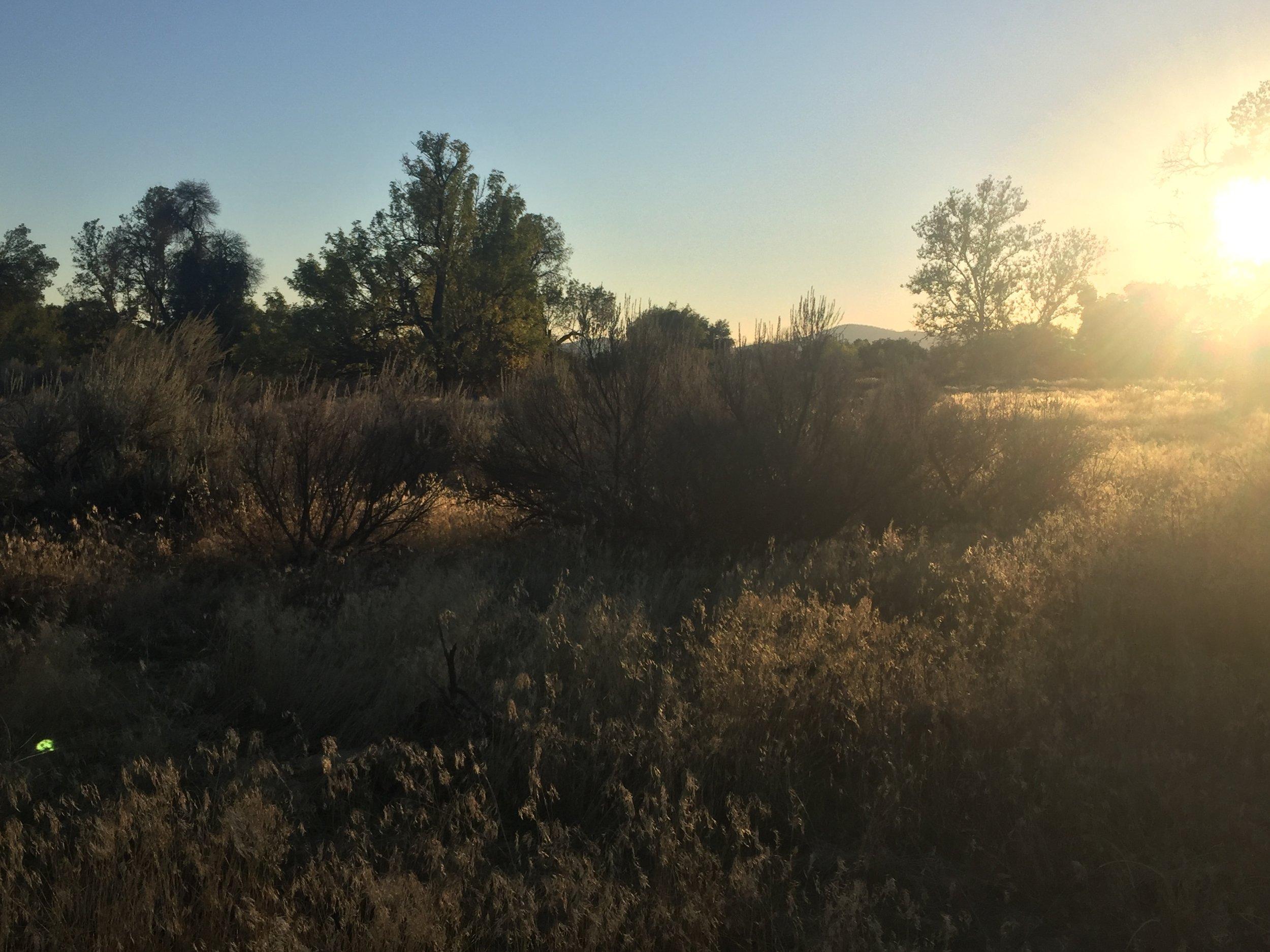 Sunset in the oaks nearing Warner Springs