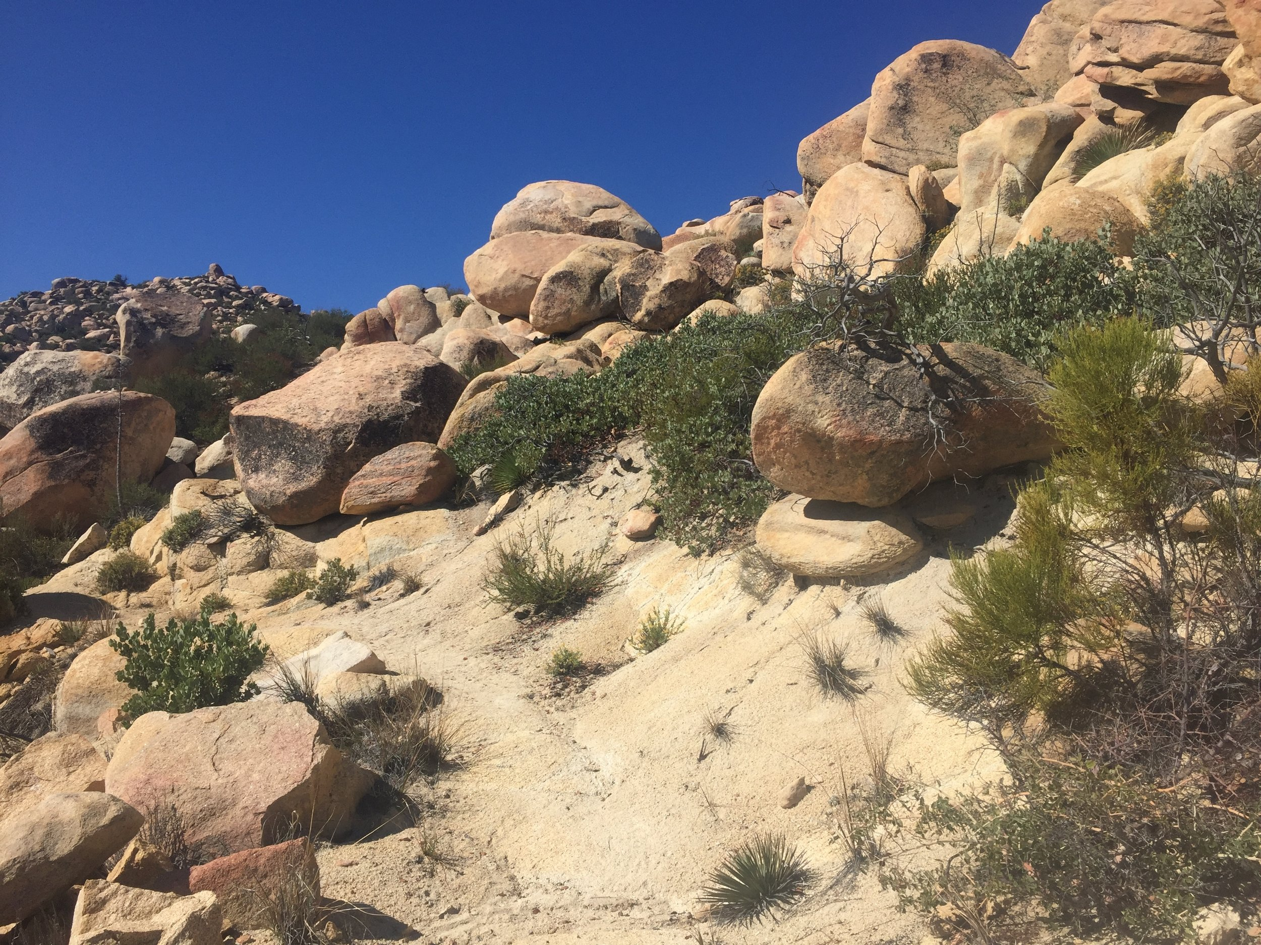 Granite boulders and deep blue sky to rival the Sierra, but plants give it away as SoCal