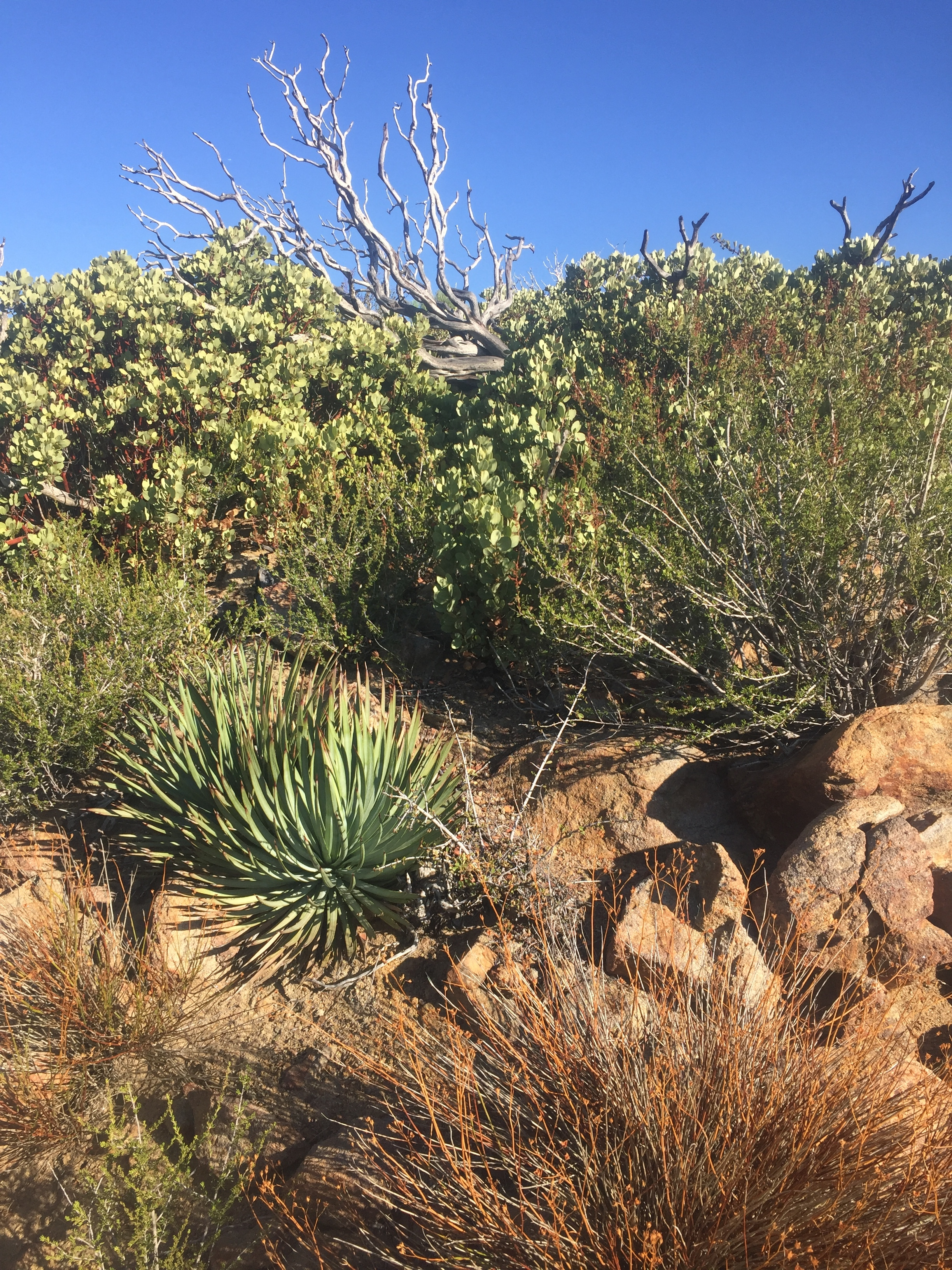 Transition from chaparral to desert