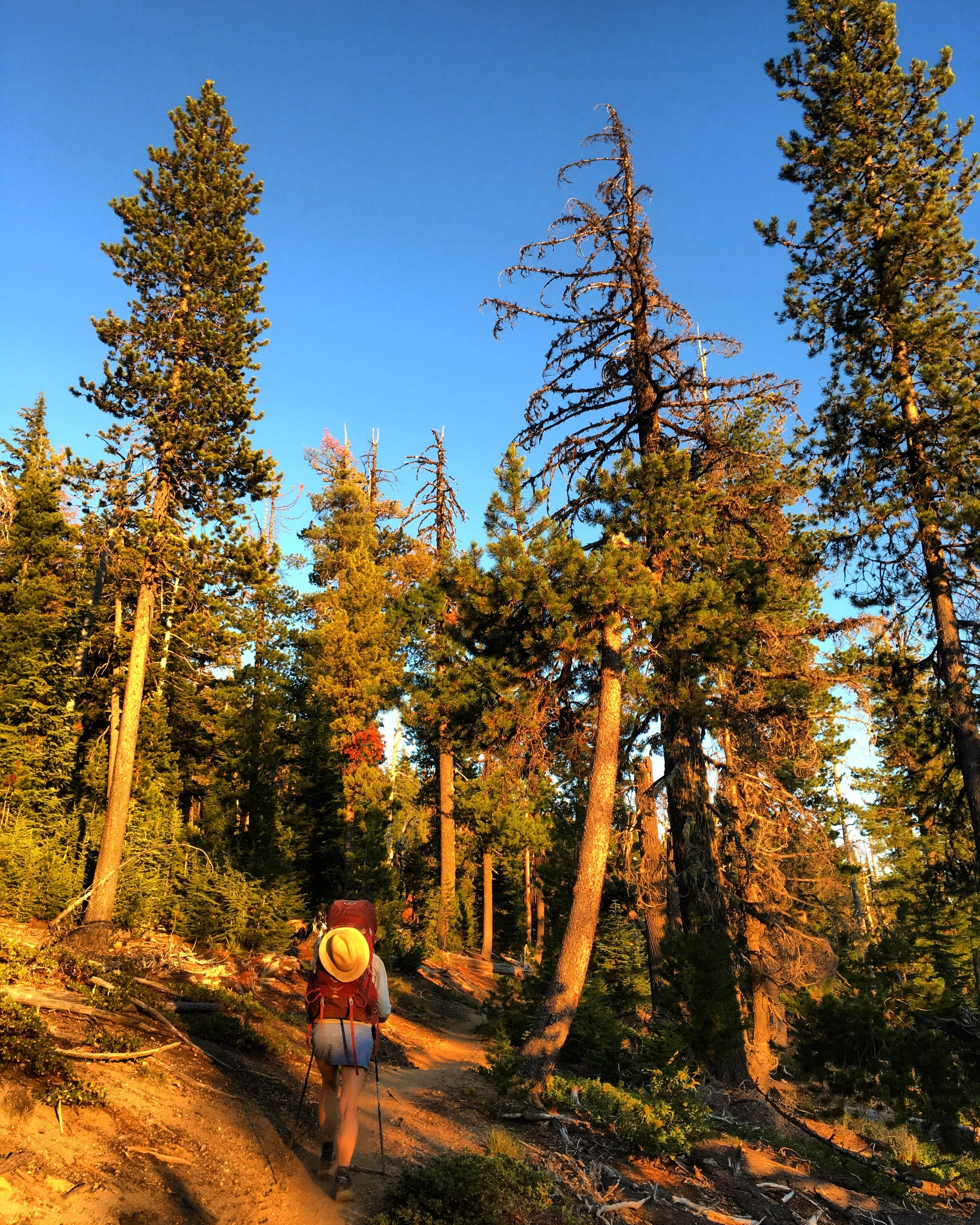 PCT Day 41- C hiking in the evening goldenhour after the OST.JPG