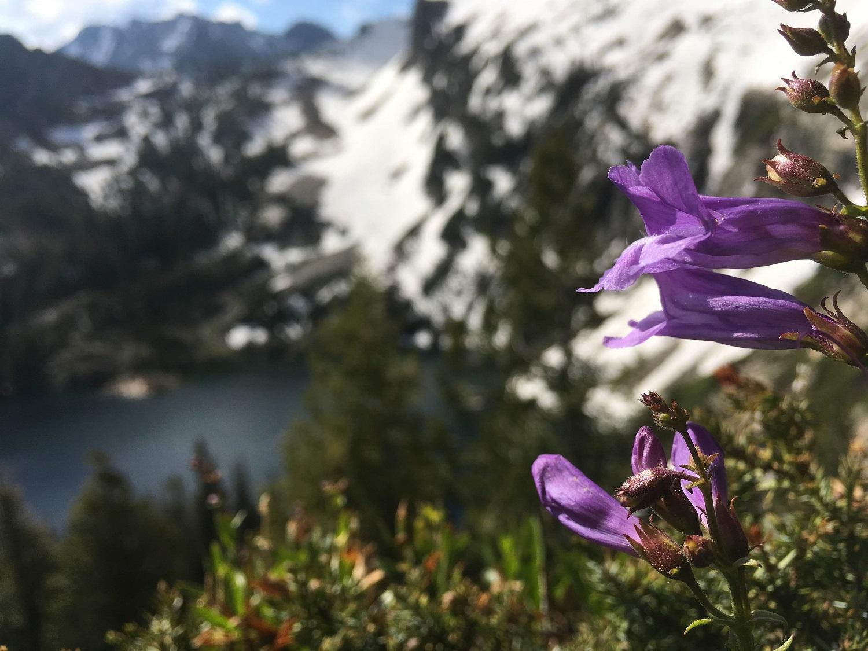 Wildflowers, Lake