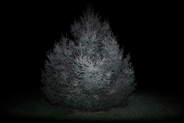 5_hollow-tree_v2.jpg