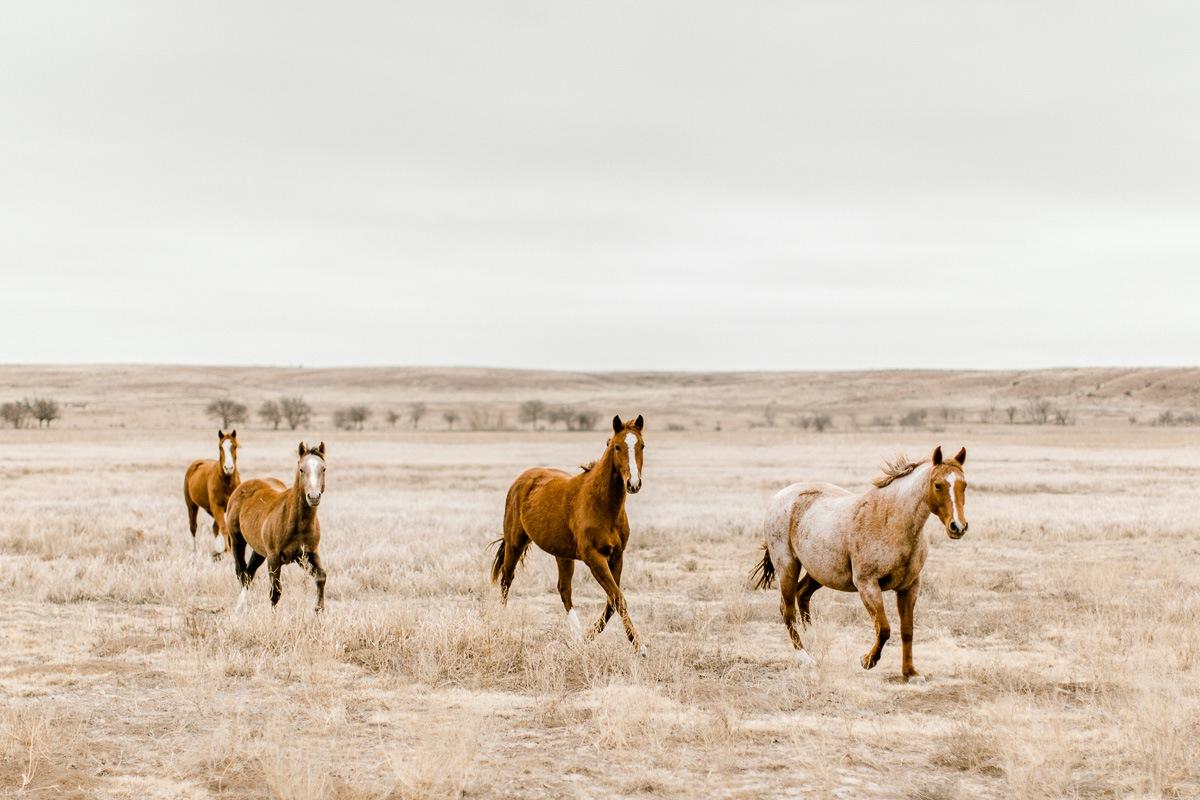 lauren-pendleton-ranch-maternity-shoot-7.jpg