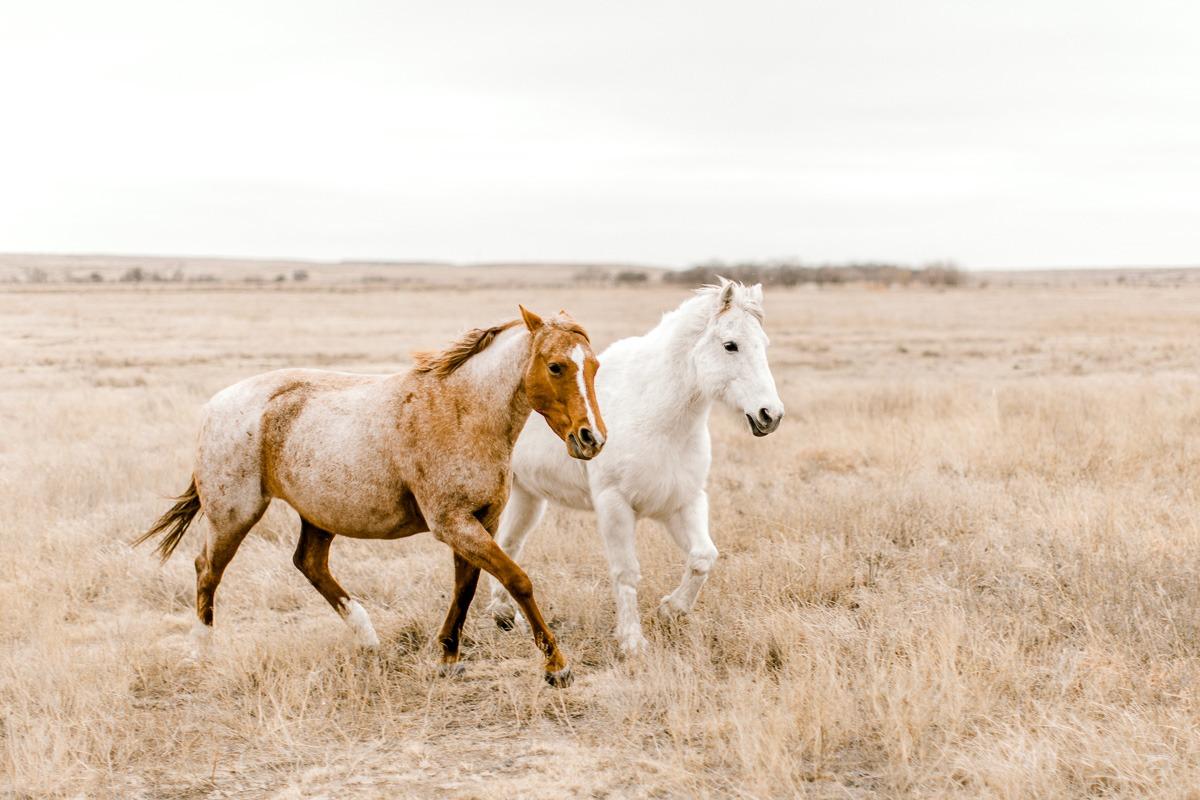 lauren-pendleton-ranch-maternity-shoot-8.jpg