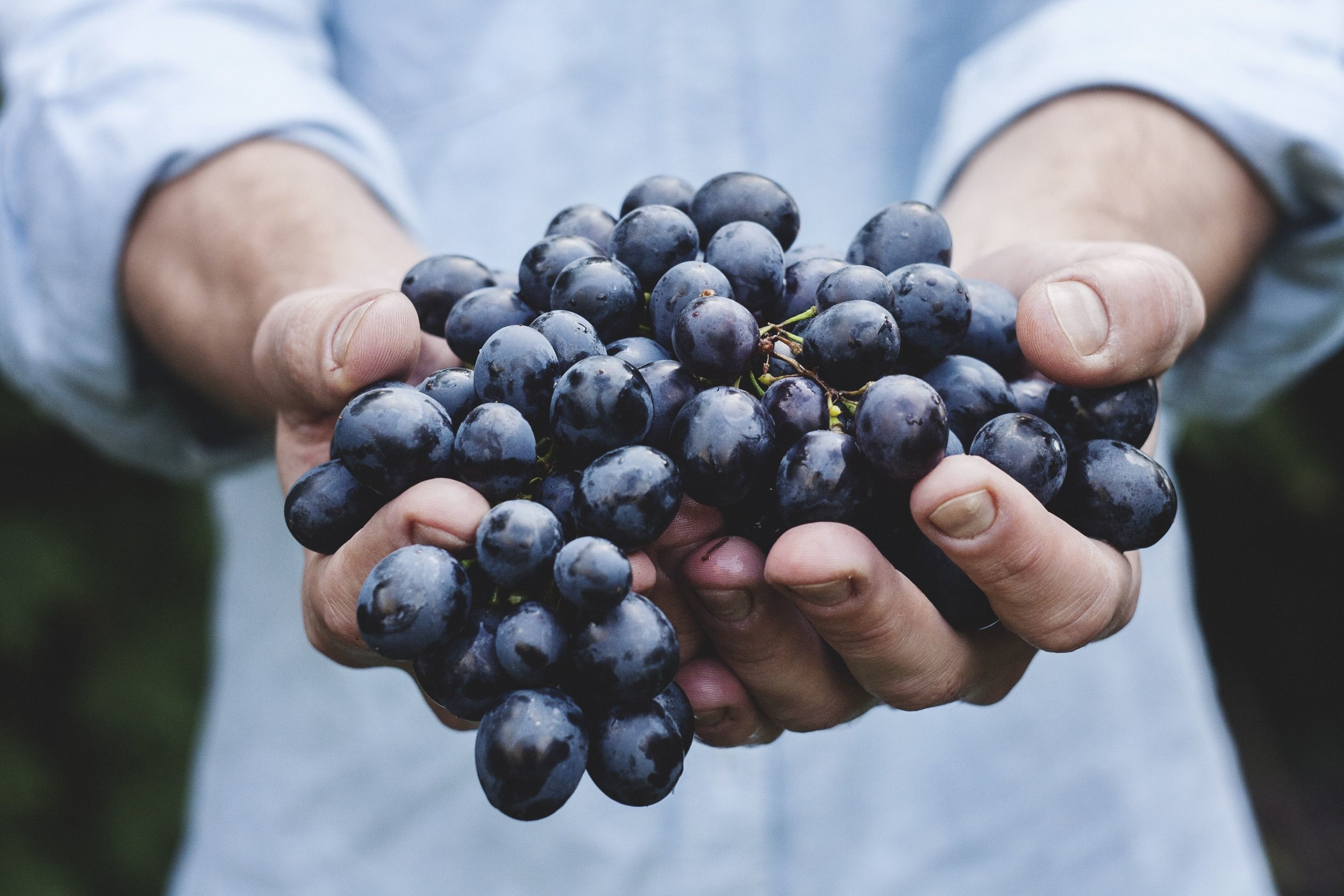 Man Holding Grapes in His Hands.jpg
