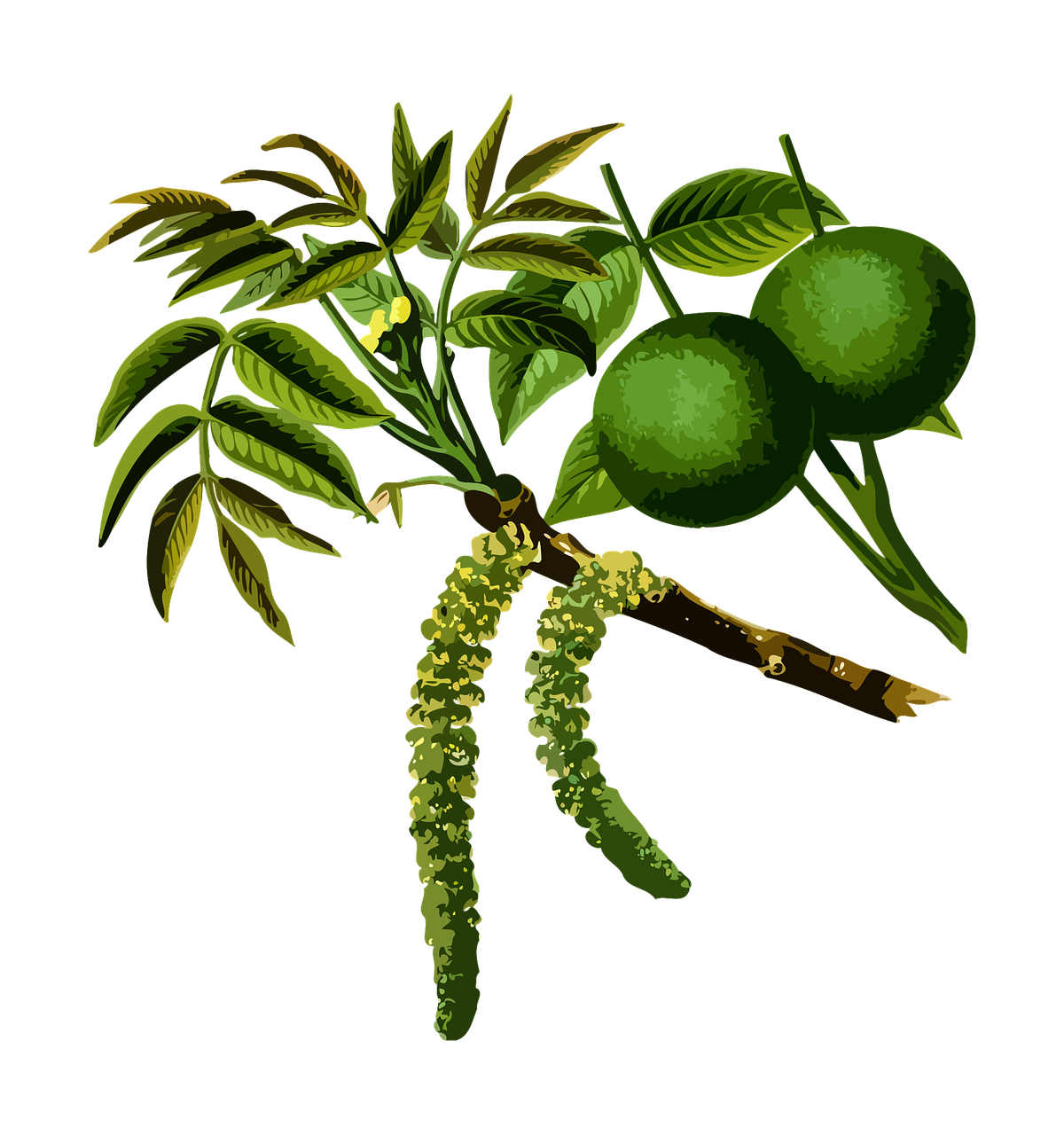 Walnut Detail.png