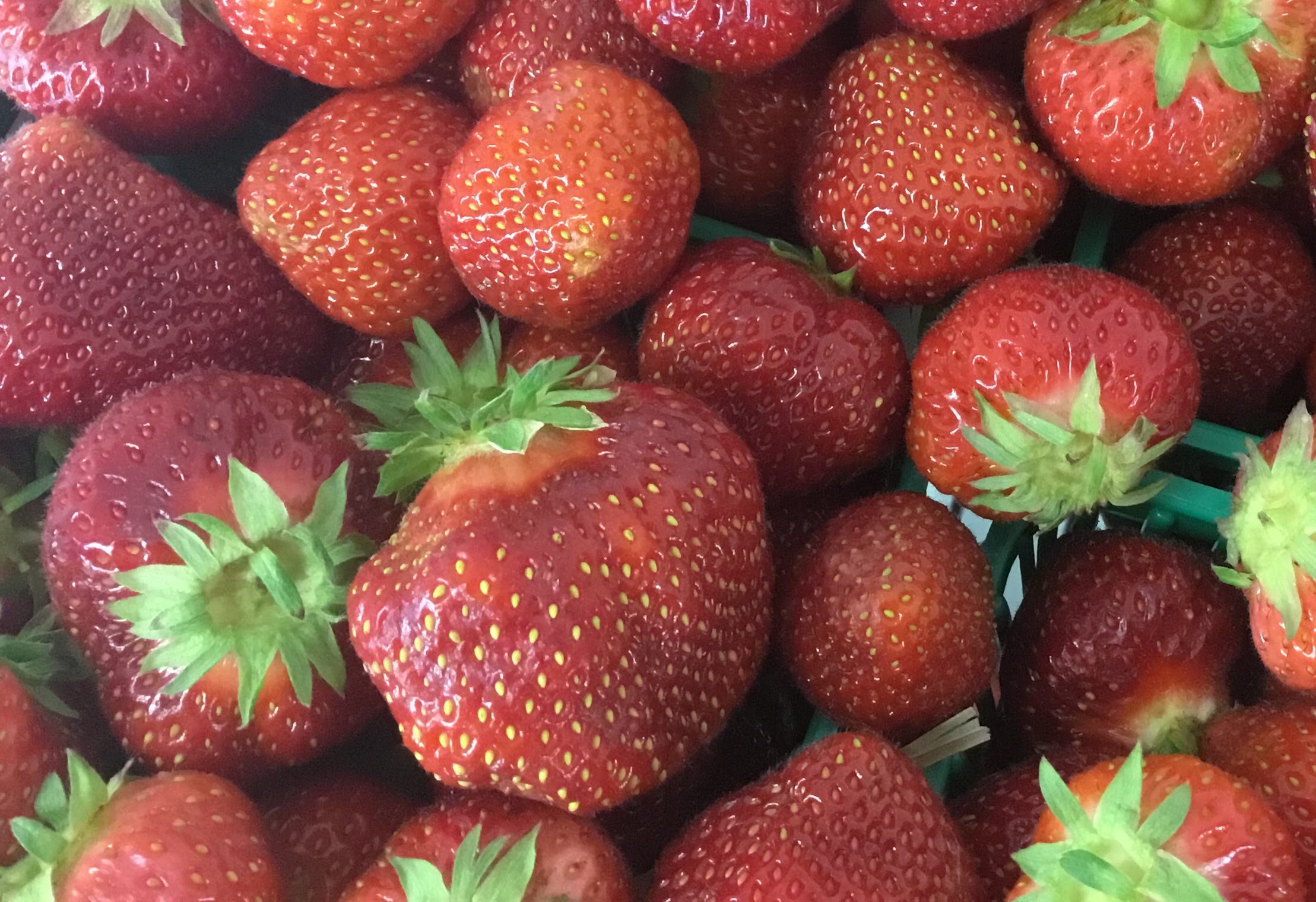 U-Pick Strawberries - Our U-Pick strawberry fields are a long-standing tradition for locals and cottage-goers. Fun for the whole family. Hours: Closed for the season