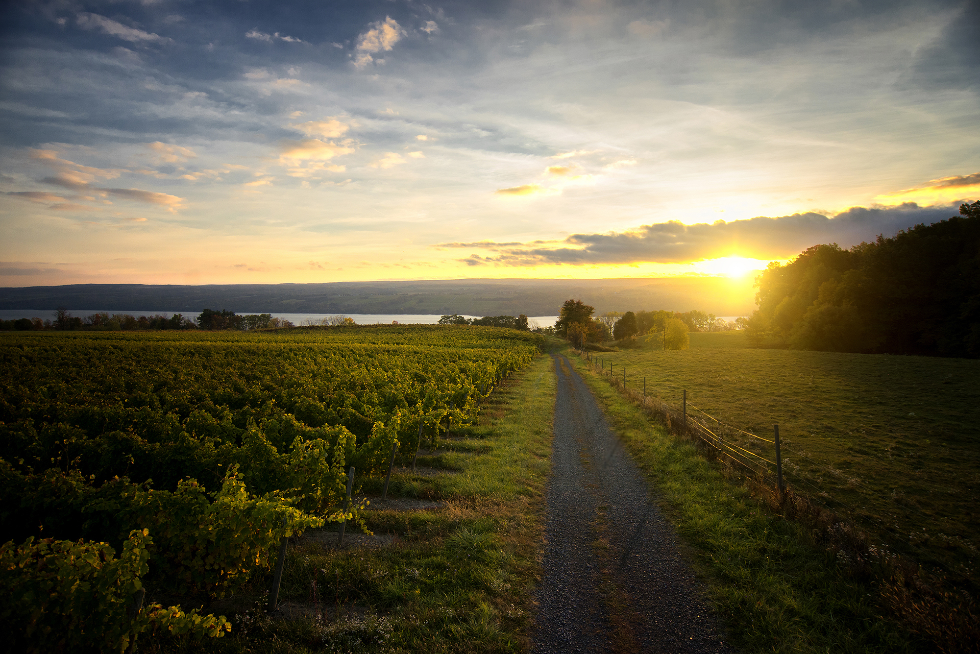 Finger Lakes Wine Country recognized as best wine region for the second year in a row!
