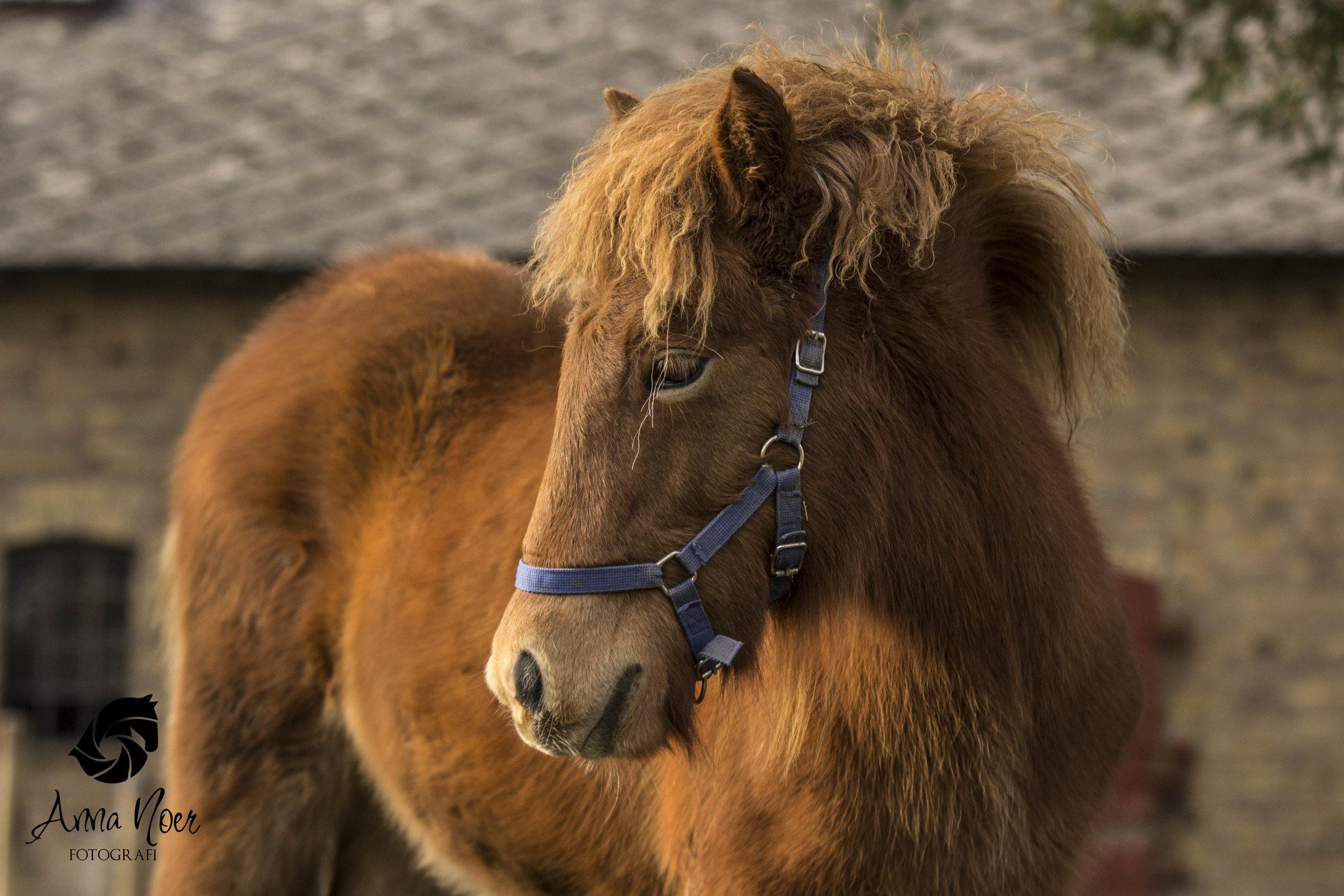 Byrjun har den smukkeste dybtrøde farve og masser af hår.