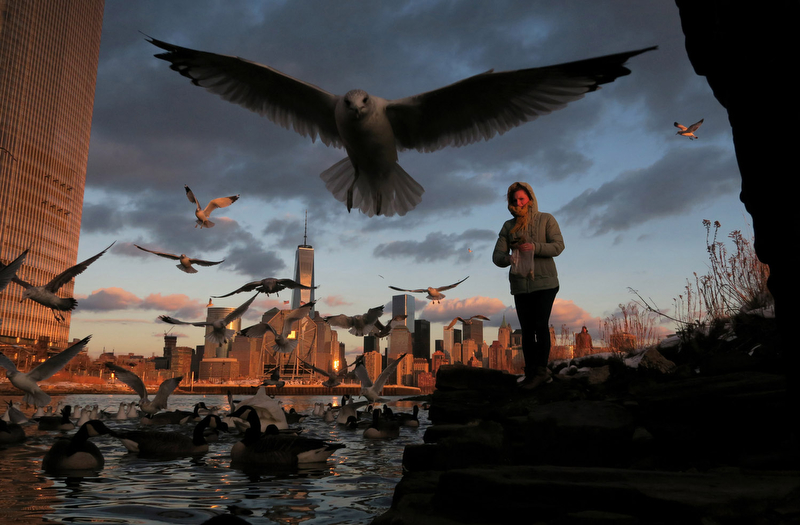 A woman feeds birds and ducks along the Hudson River across from One World Trade Center in Lower Manhattan at sunset in a park in Jersey City, New Jersey, January 30, 2015.