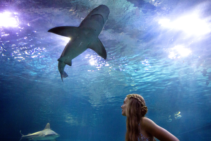 Sharks Approaching - A girl takes a break from the dance floor during The Hun School of Princeton Prom at The Adventure Aquarium and checks out the shark tank.   Saturday May 30, 2015. Camden, NJ, USA