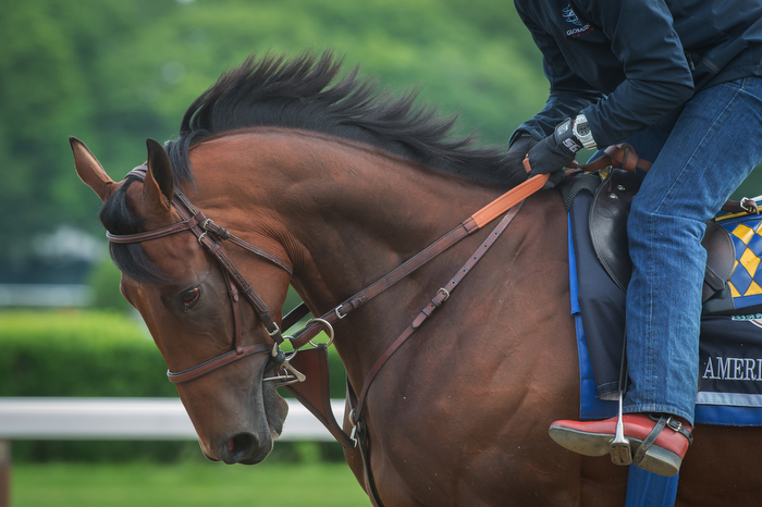 Belmont Stakes and Triple Crown hopeful American Pharoah, trained by Bob Baffert, with exercise rider Jorge Alvarez up jogs on the main track at Belmont Park Racetrack Wednesday June 3, 2015.