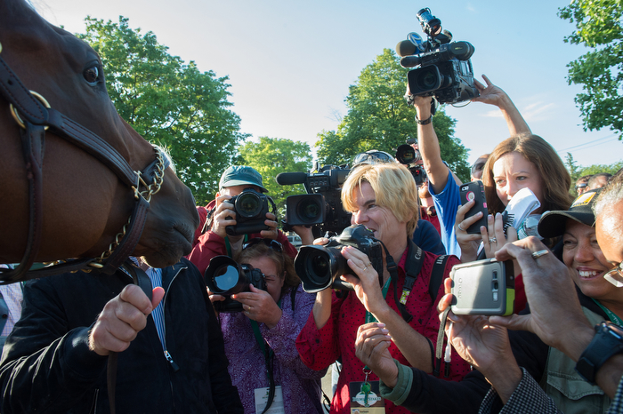 2015 Belmont Stakes and Triple Crown winner American Pharoah is greeted by photographers the morning after winning the Belmont Stakes and being crowned Triple Crown Winner, this morning at Belmont Park, Sunday June 7, 2015.
