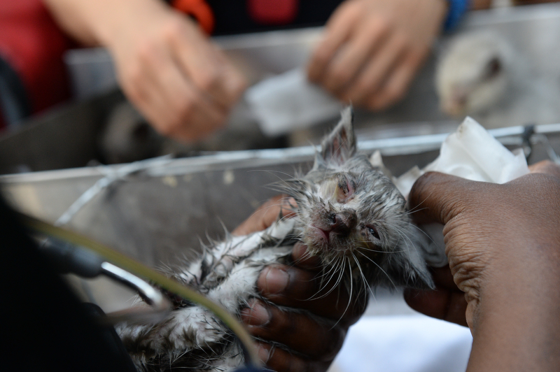 Honorable MentionTodd Maisel/Daily NewsONE LUCKY KITTYFive kittens and a rabbit were rescued from a fire in an appliance repair shop on Broadway in Bushwick, Brooklyn on May 29, 2016. The fire destroyed two stores, but the kittens were ok.