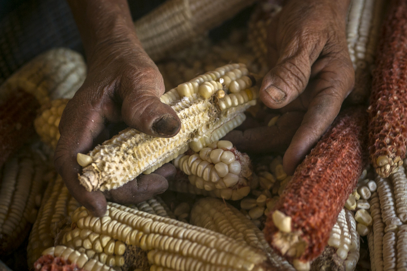 Jan. 08, 2016 - Yalaguina, Nicaragua: Monica Perez, 85, shells kernels of corn by hand outside her home in Yalaguina, a small village near Palacaguina, Jan. 08, 2016. Nicaragua, the second poorest country in the Western Hemisphere after Haiti, has been hard hit by climate change and drought but sustainable farming and irrigation projects have given some communities a means of survival.