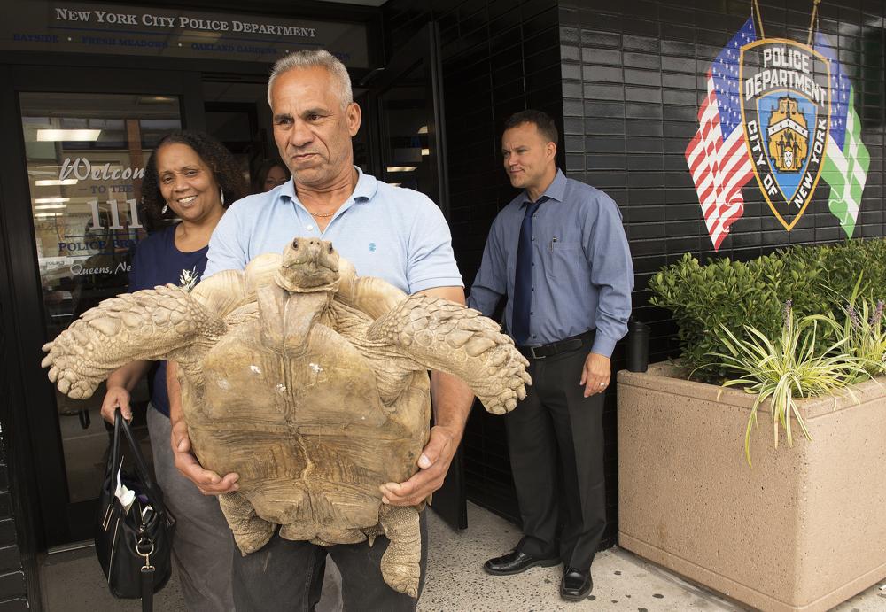 Stolen tortoise