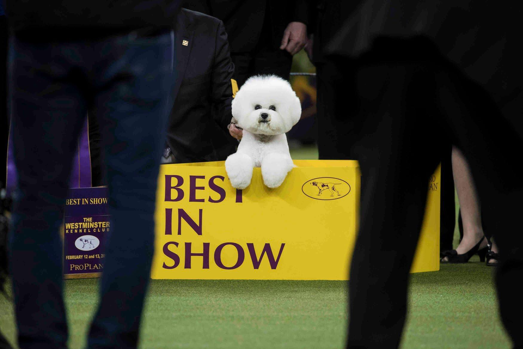 - 1st Place - Karsten Moran - Westminster Dog Show - Independent