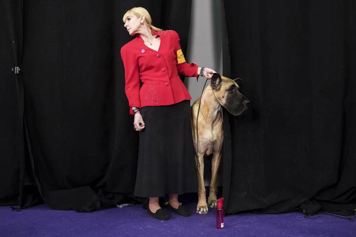Westminster Dog Show