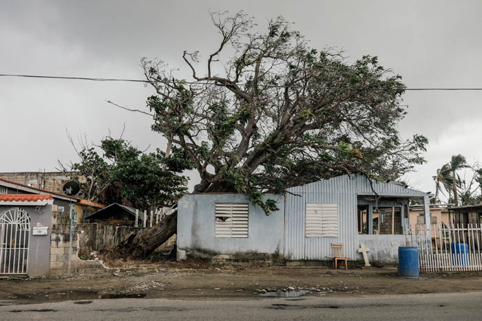 February 12, 2018: Punta Santiago, Humacao Puerto Rico - A fallen tree rests on a house in Punta Santiago. Nearly 5 months after Hurricane Maria reached the island around 1/3 of Puerto Rico is still without power.  After a catastrophic hurricane, rates of mental illness continue to rise.