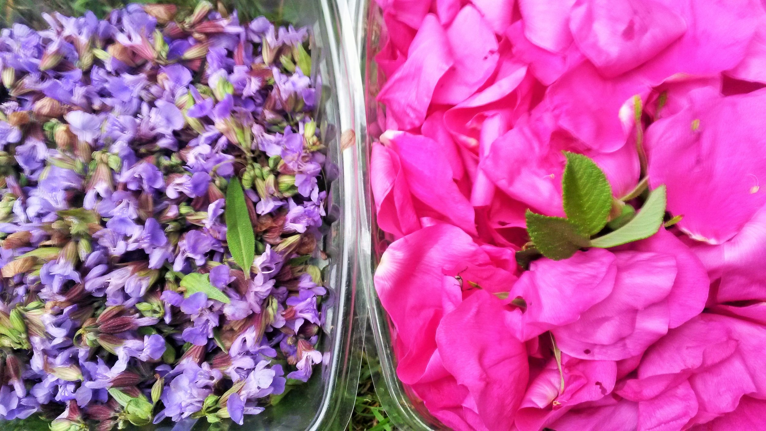 Mint Flowers and Rose Pedals to be used in simple syrups~