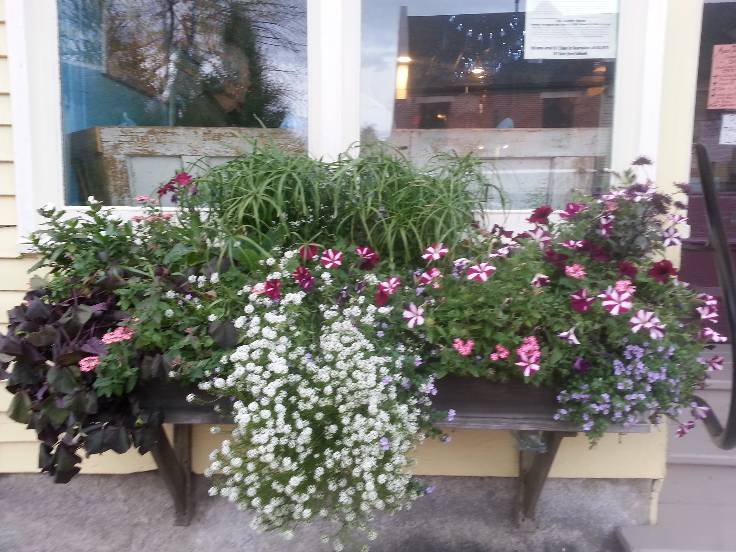 - Too busy to fill your window boxes. Drop them off. we'll fill them for you. It's that easy!