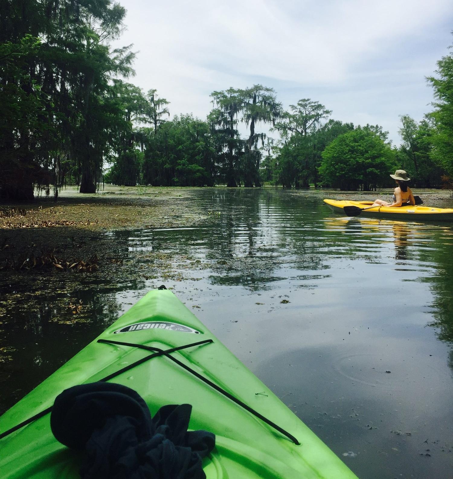 Swamp kayaking near New Orleans.