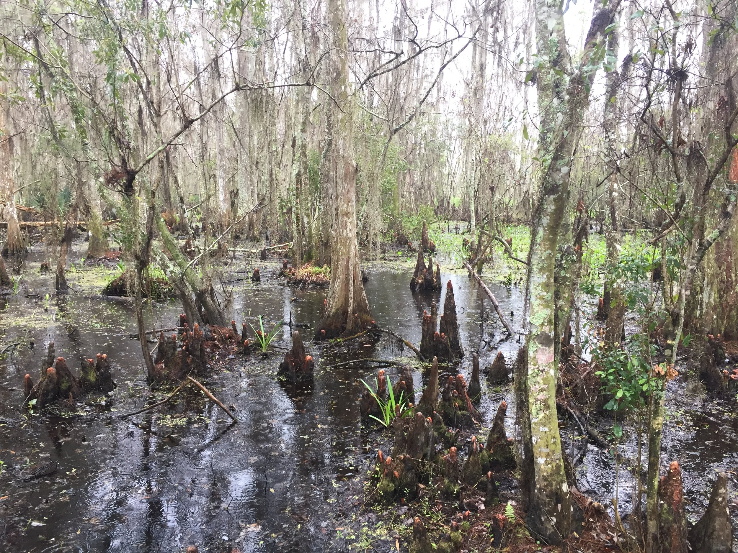 Hiking in the swamps near New Orleans.