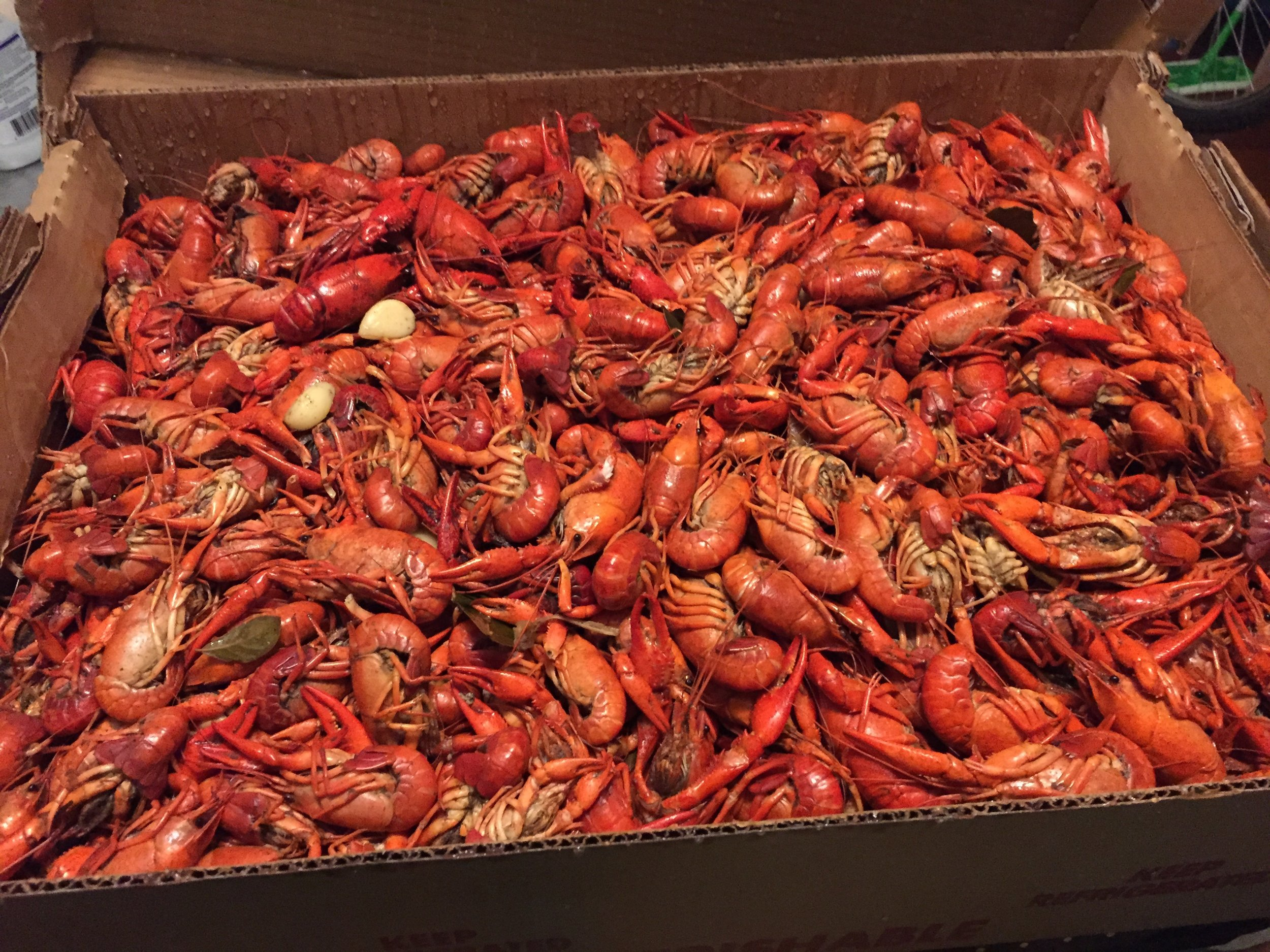 Chowing down on a box of crawfish during a Mardi Gras tailgate.
