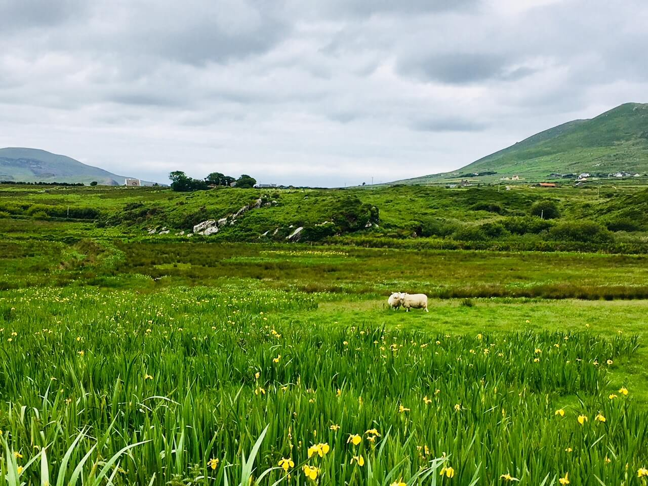 Beautiful Green Ireland