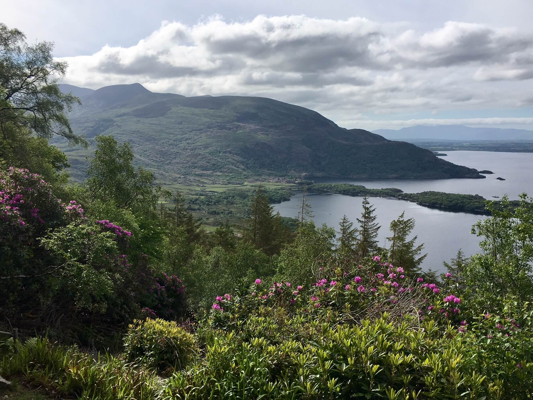 View from Torc Mountain in Killarney National Park, Ireland