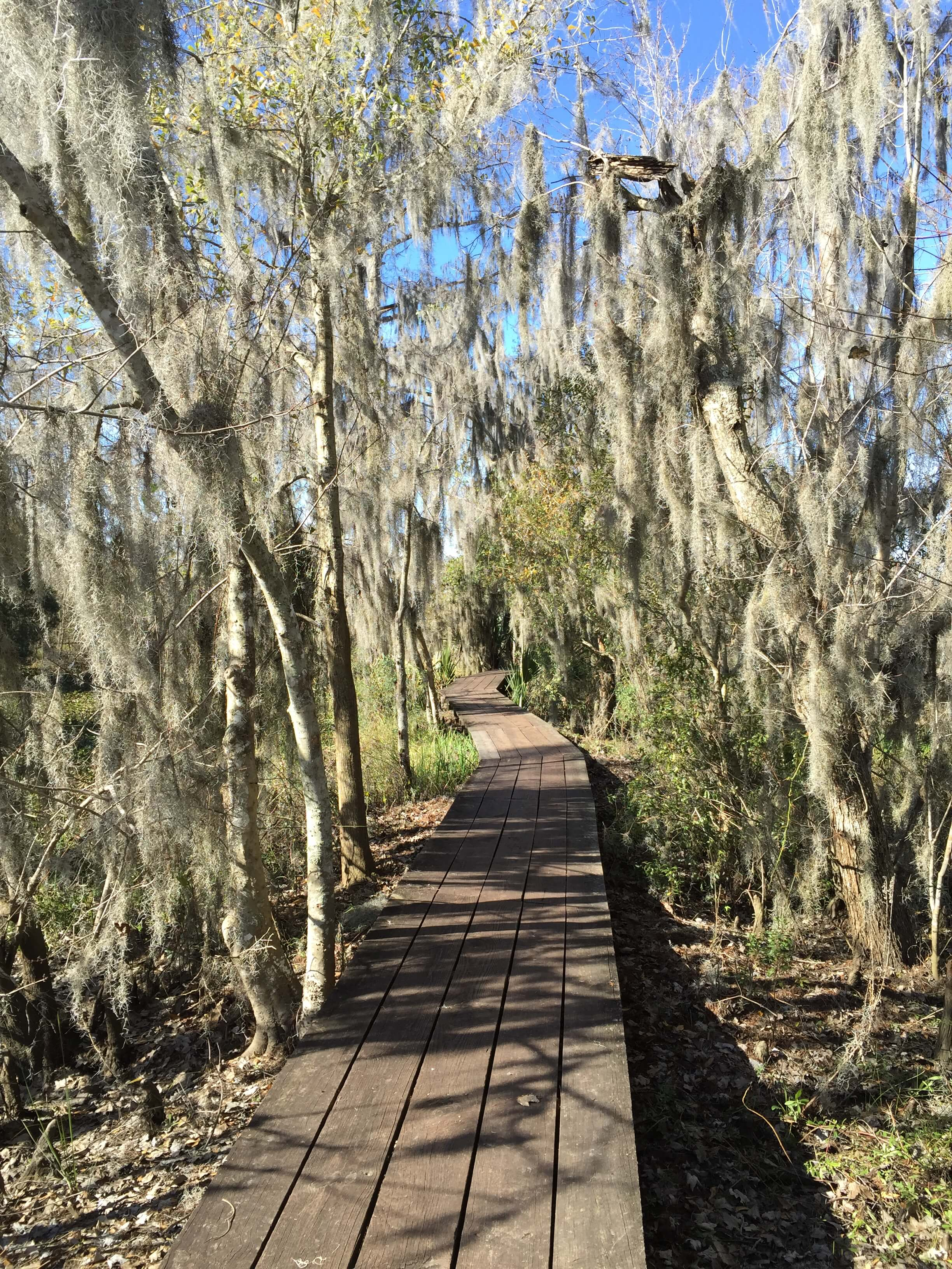Swamp Boardwalk Hike Near New Orleans