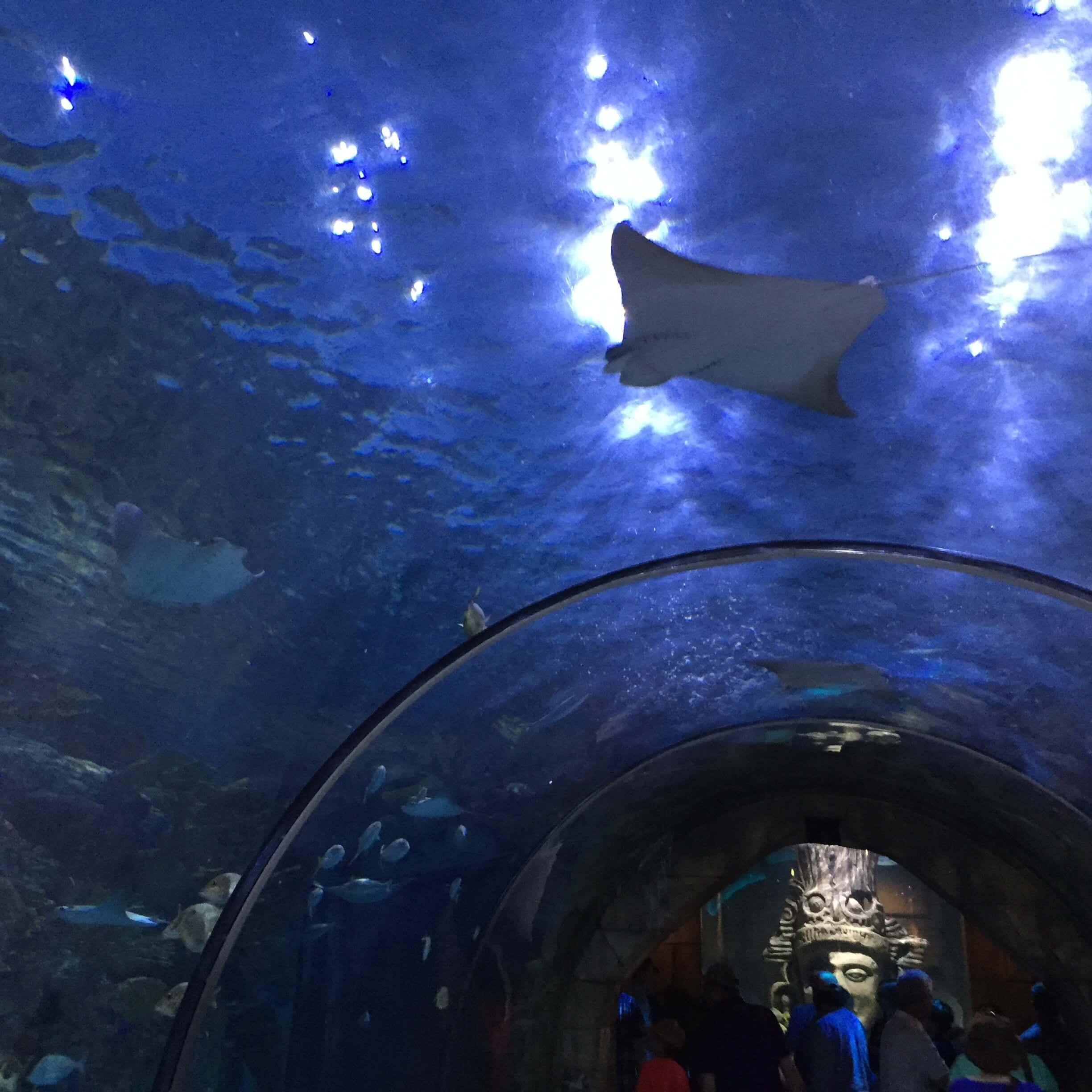 New Orleans' Aquarium