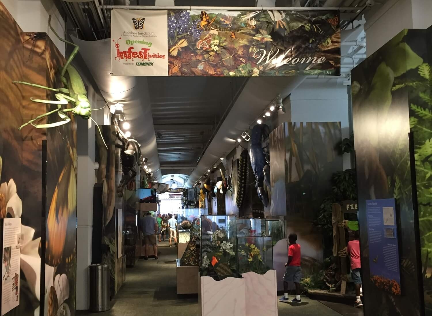 Exploring the Butterfly Garden and Insectarium of New Orleans. #11 in Best Things to Do in the French Quarter.