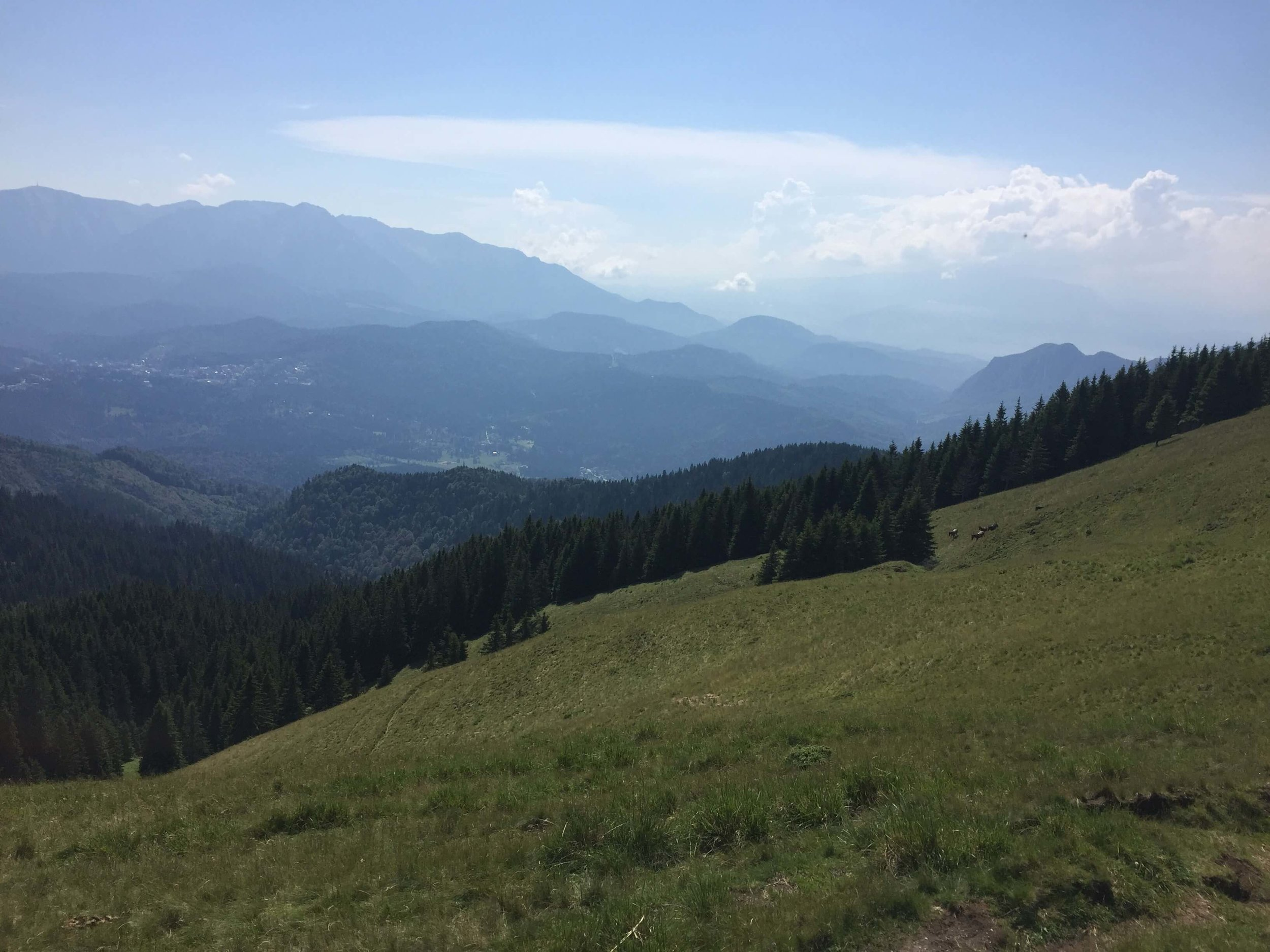 Taking in these amazing views from the hike of to Piatra Mare after getting through Sapte Scari.