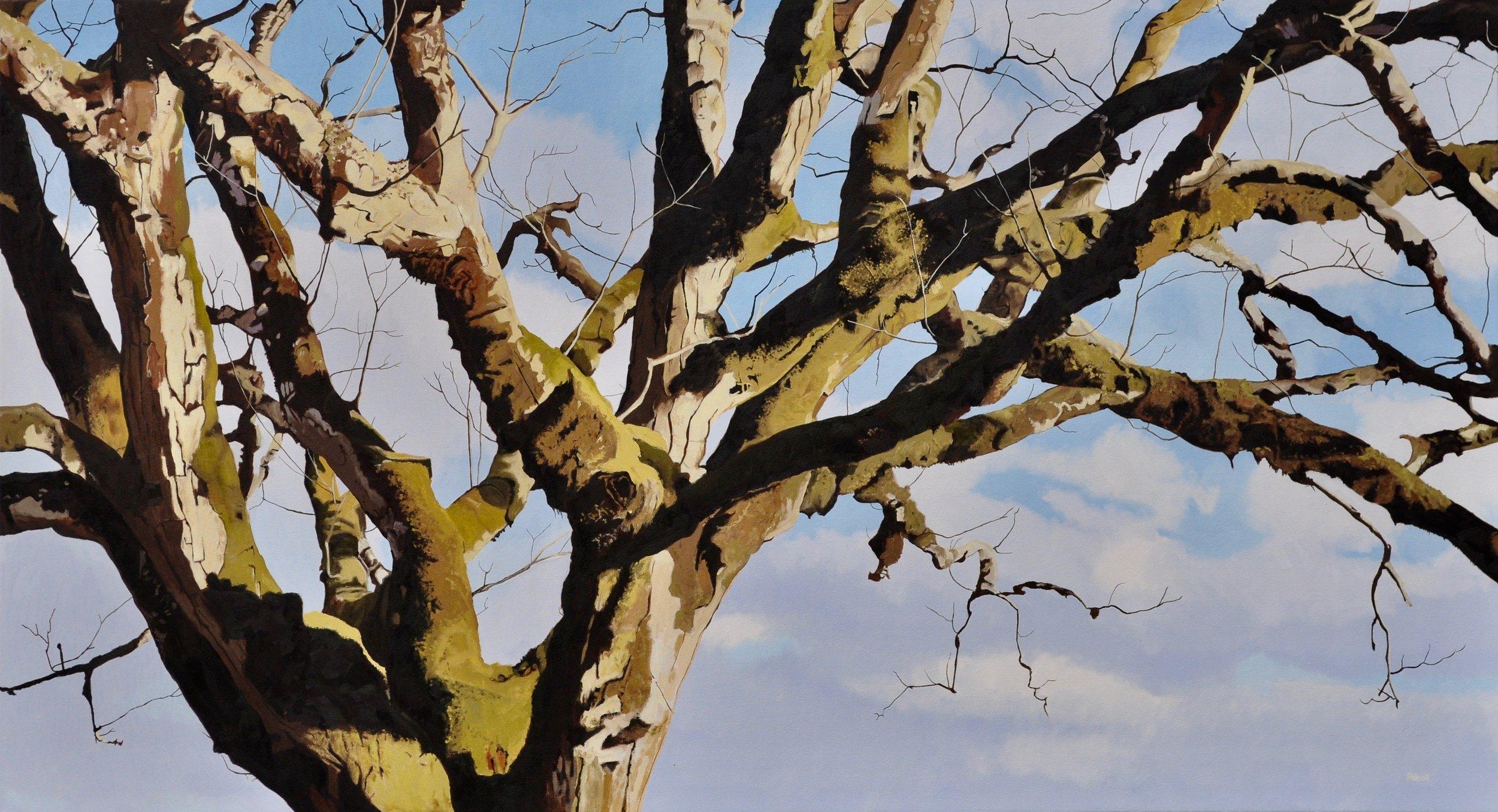 Big Tree, oil on canvas, 36×66