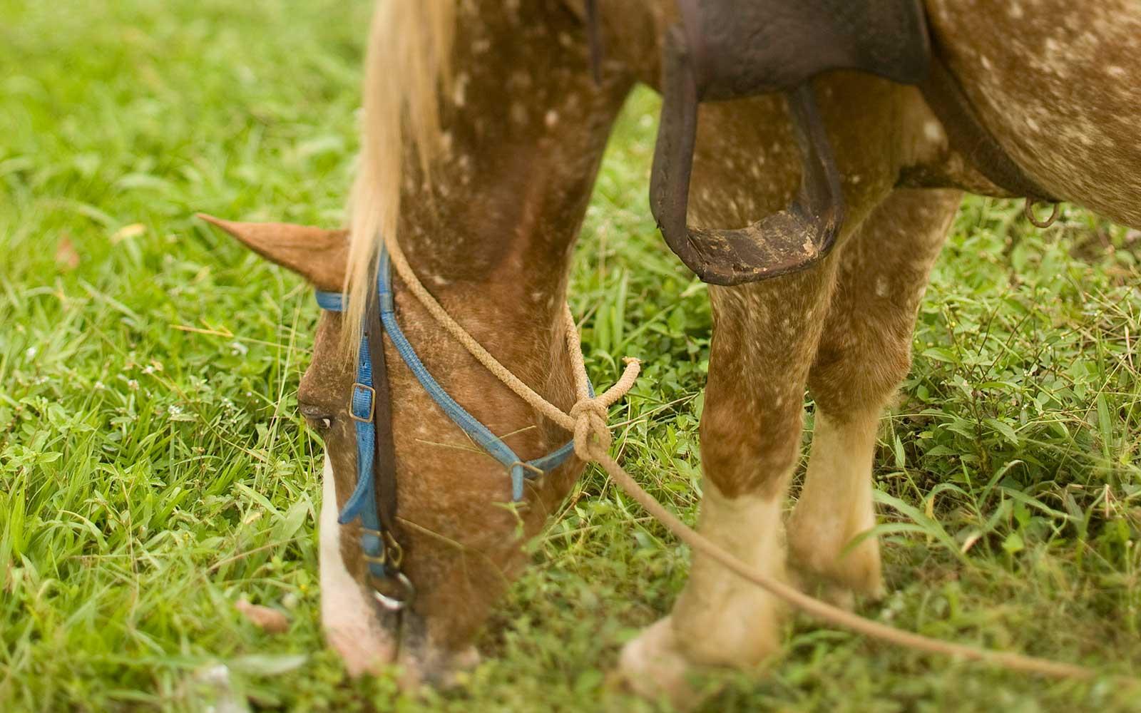 Horseback-Riding-1-R.jpg