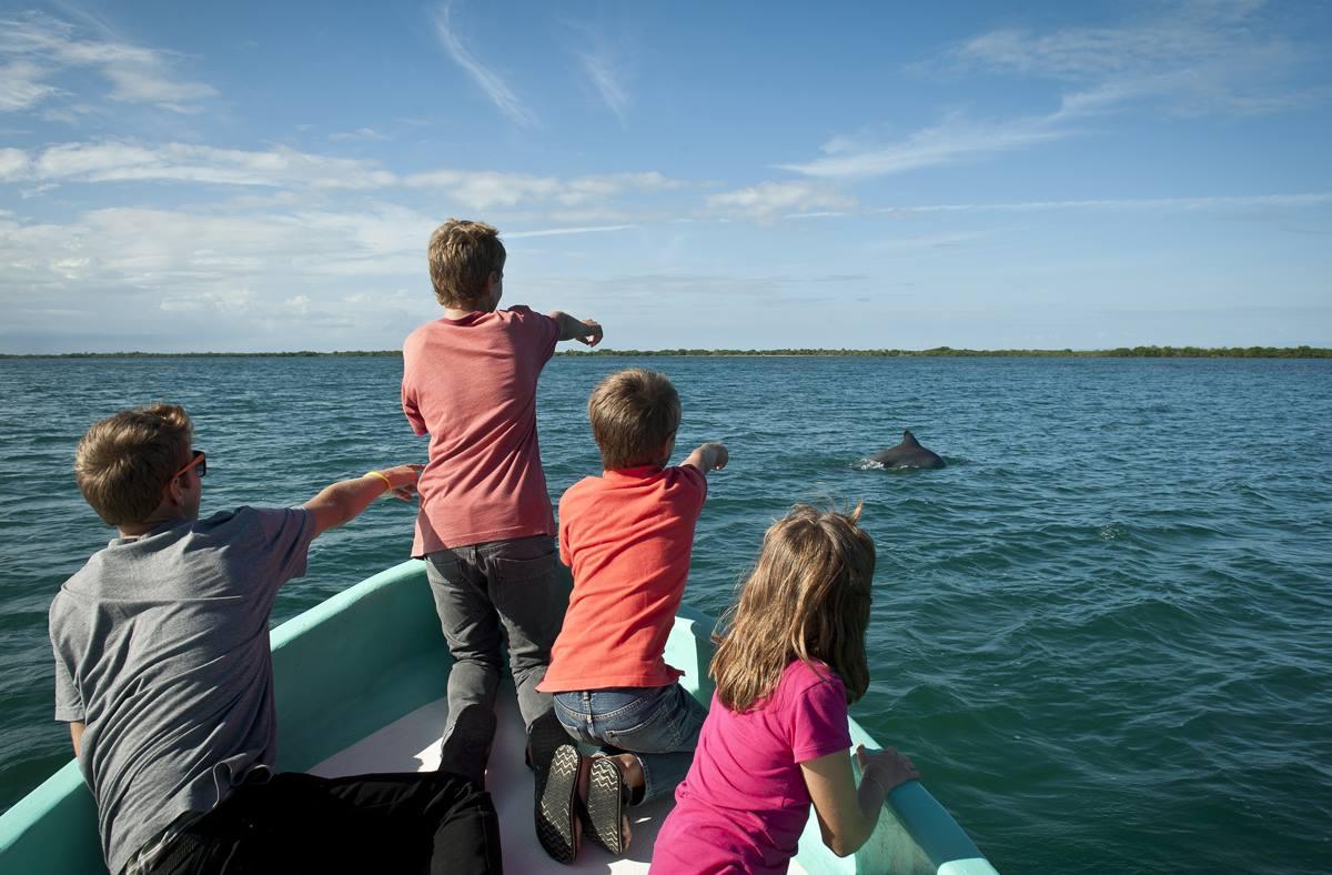 boatride dolphin.jpg