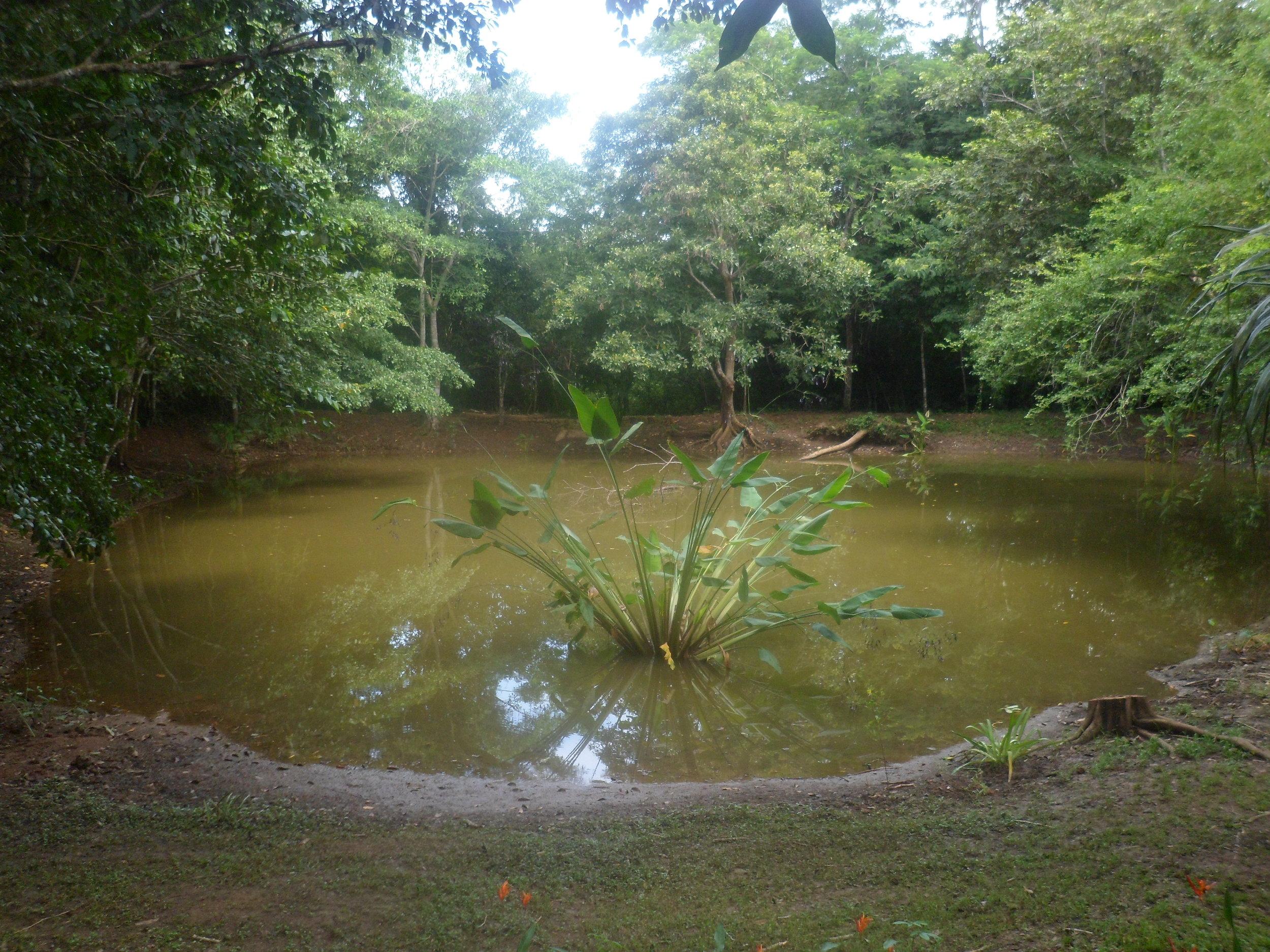 Jardin Botanico de Belice (5).JPG