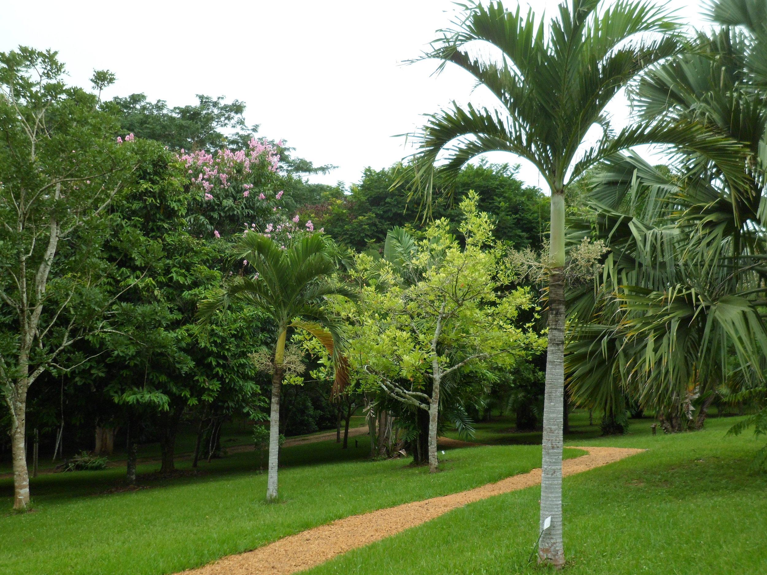 Jardin Botanico de Belice (7).JPG
