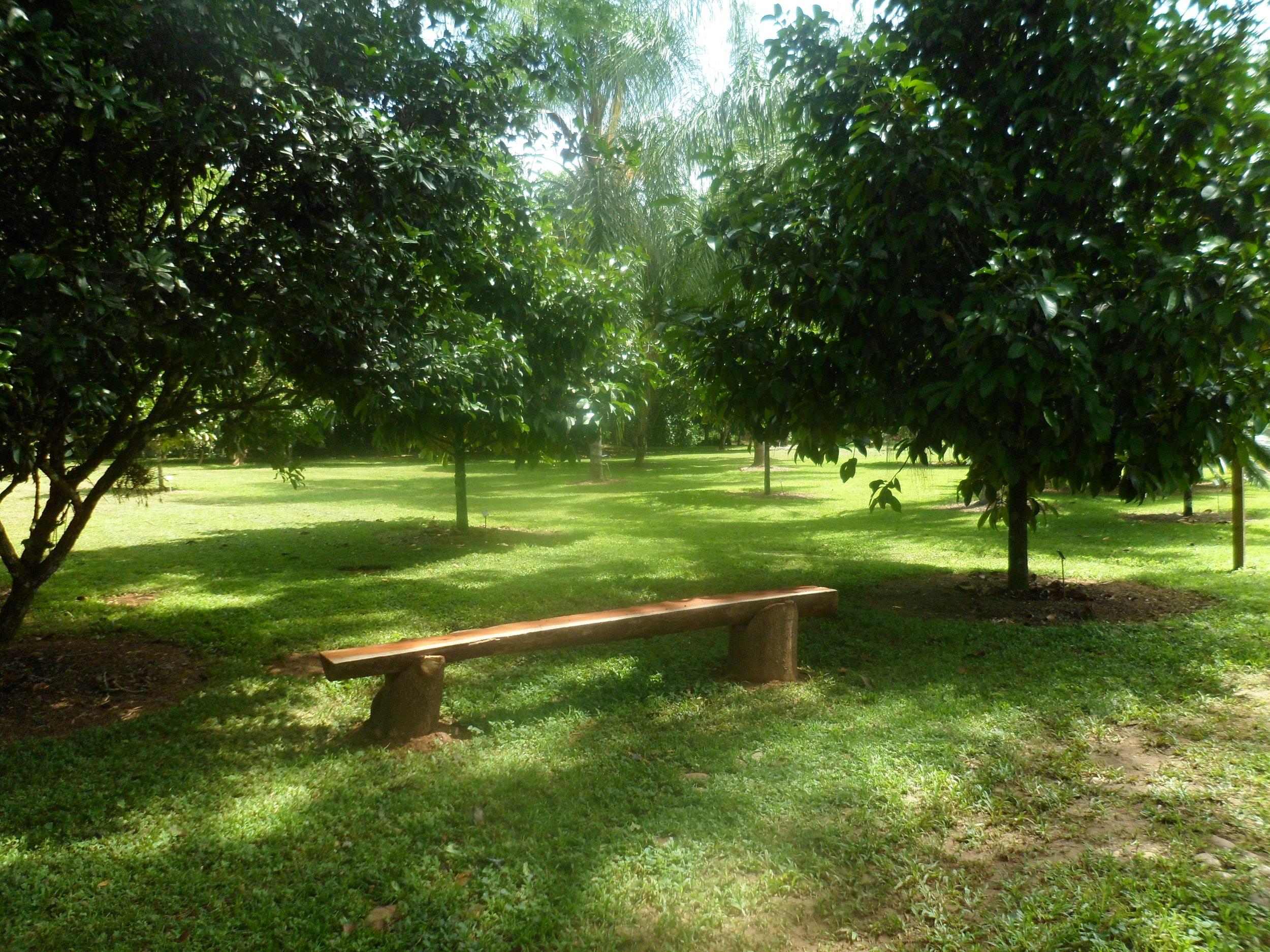 Jardin Botanico de Belice (8).JPG