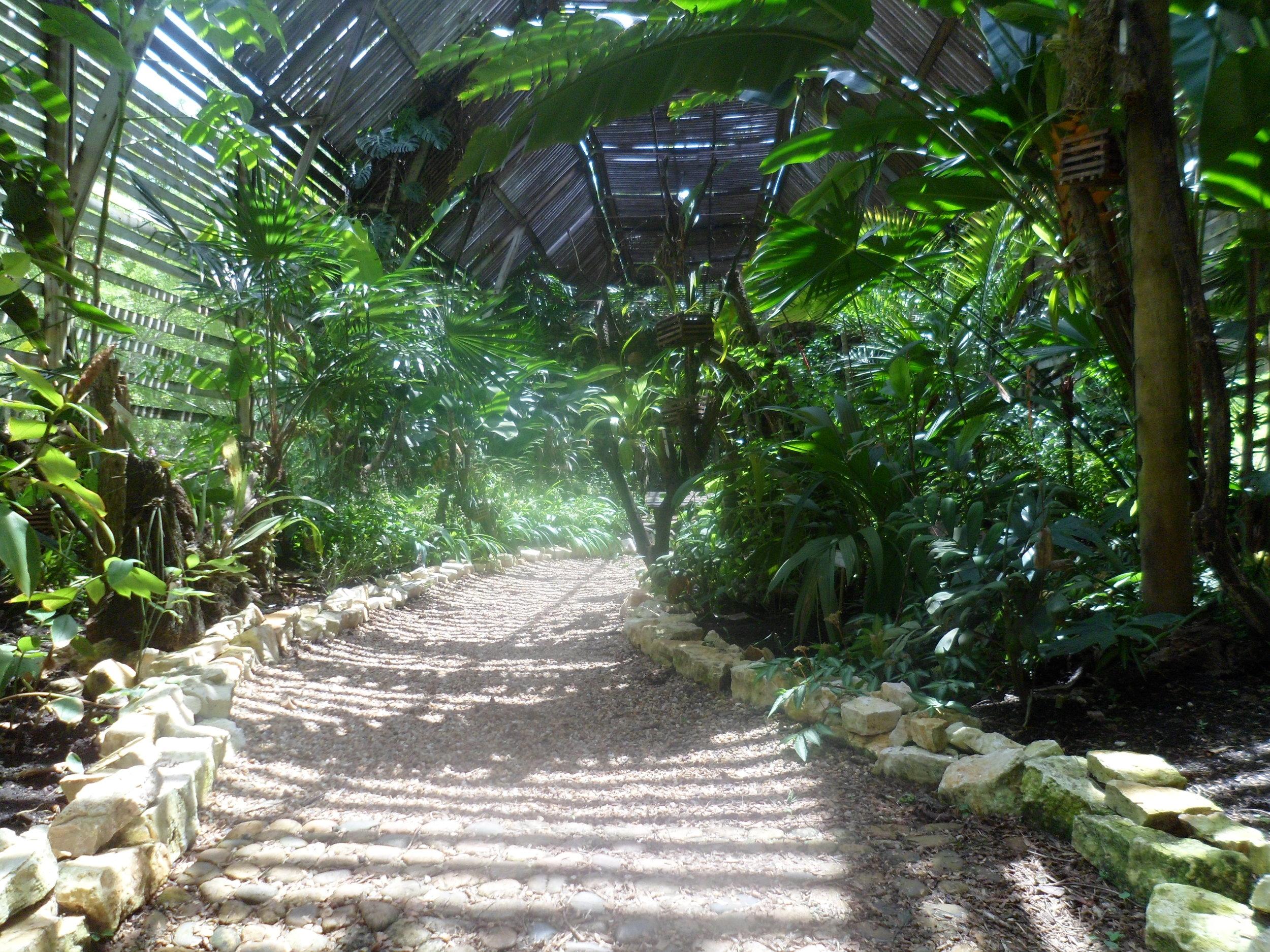 Jardin Botanico de Belice (9).JPG