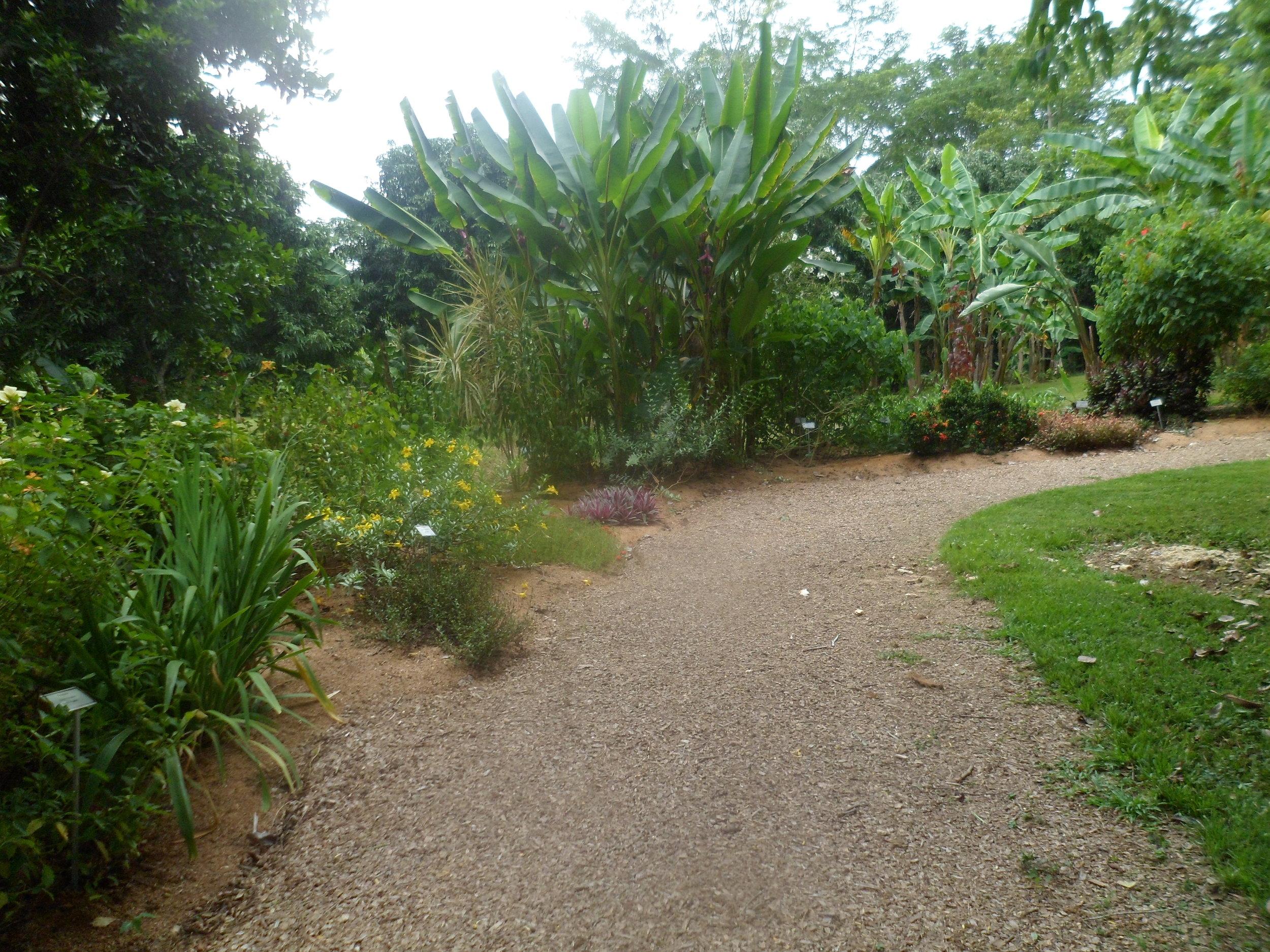 Jardin Botanico de Belice (10).JPG