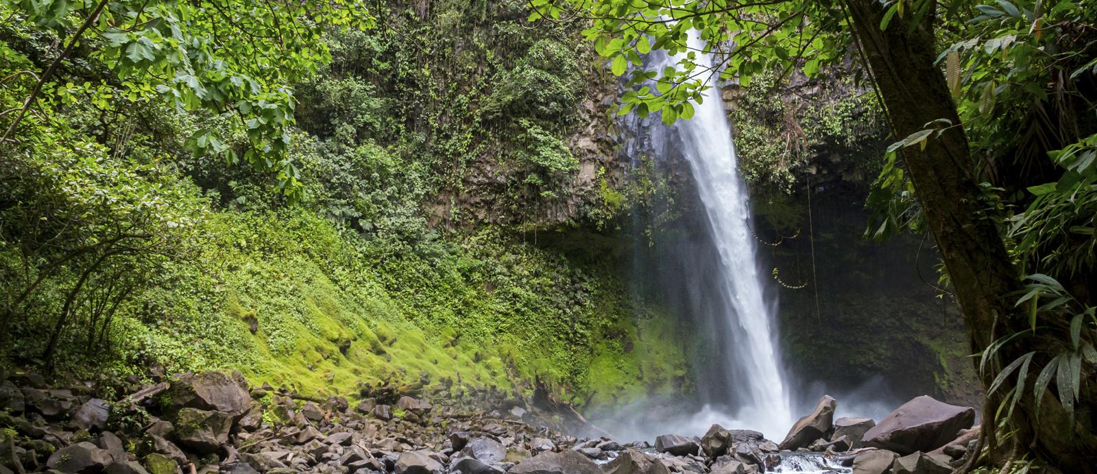 waterfall-jungle1 edited.jpg